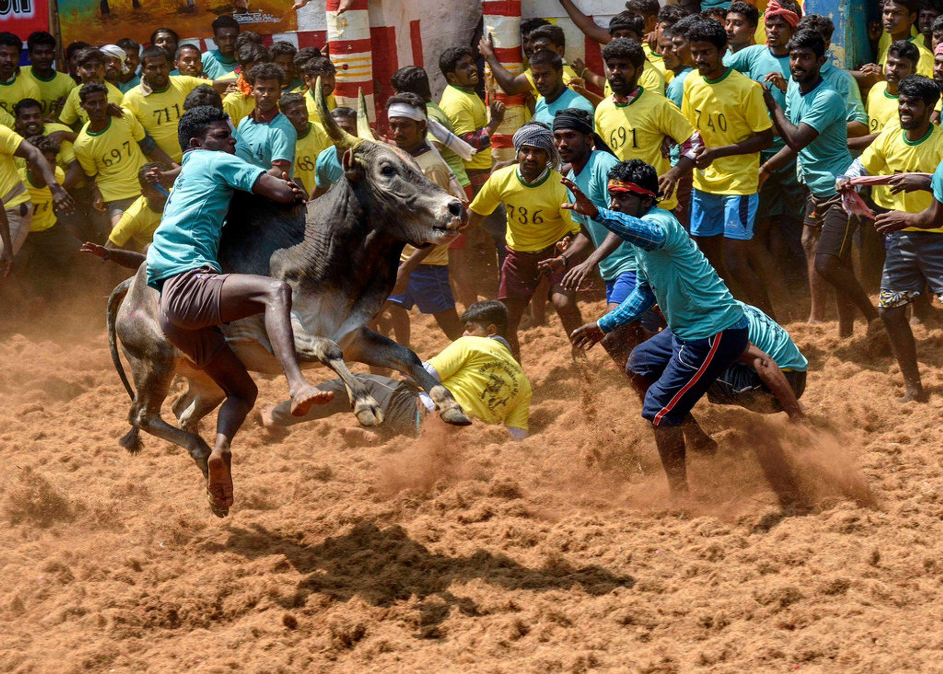 Best time to see Jallikattu in India 2020