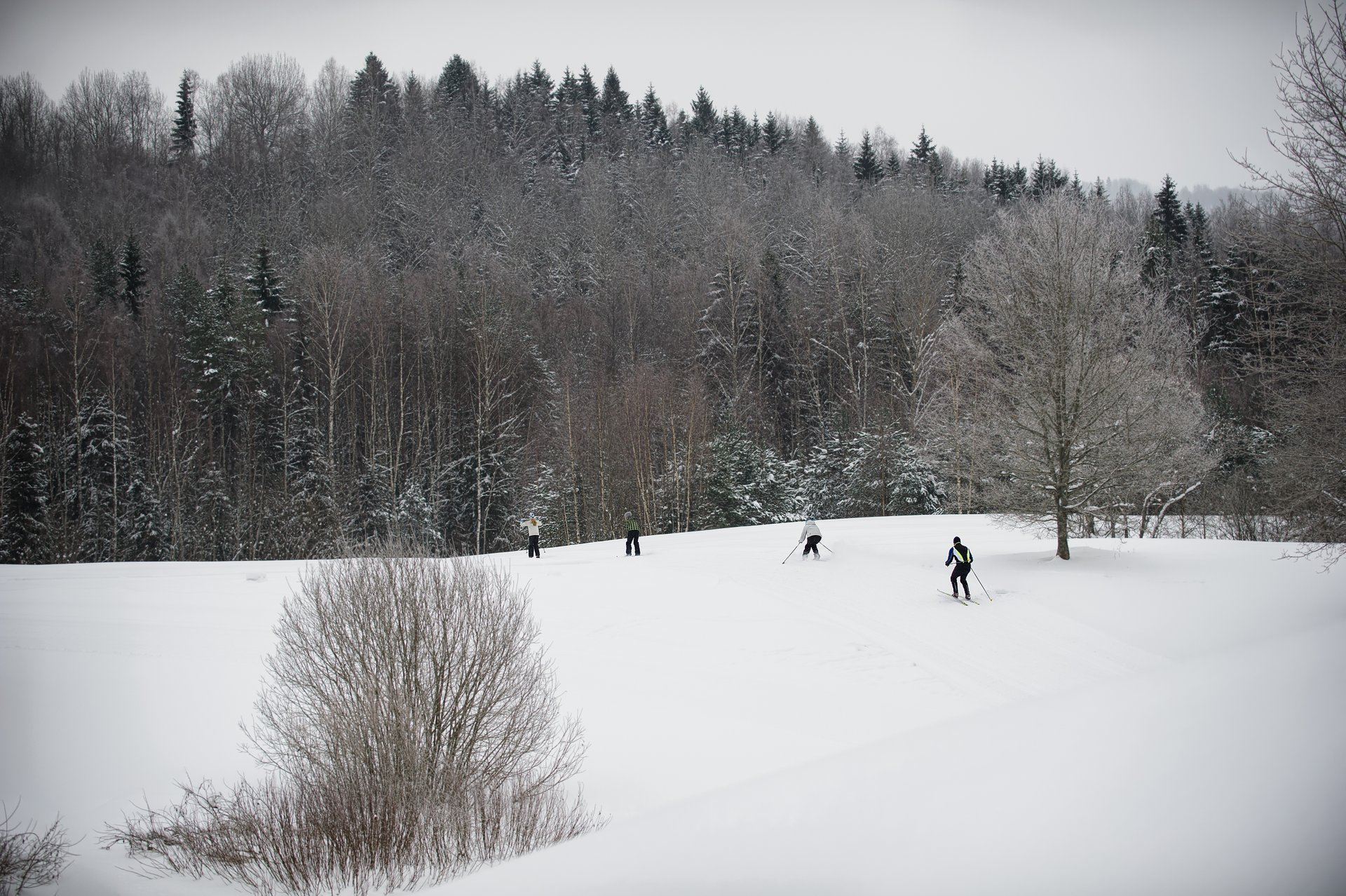 Cross-Country Skiing in Estonia - Best Season 2020