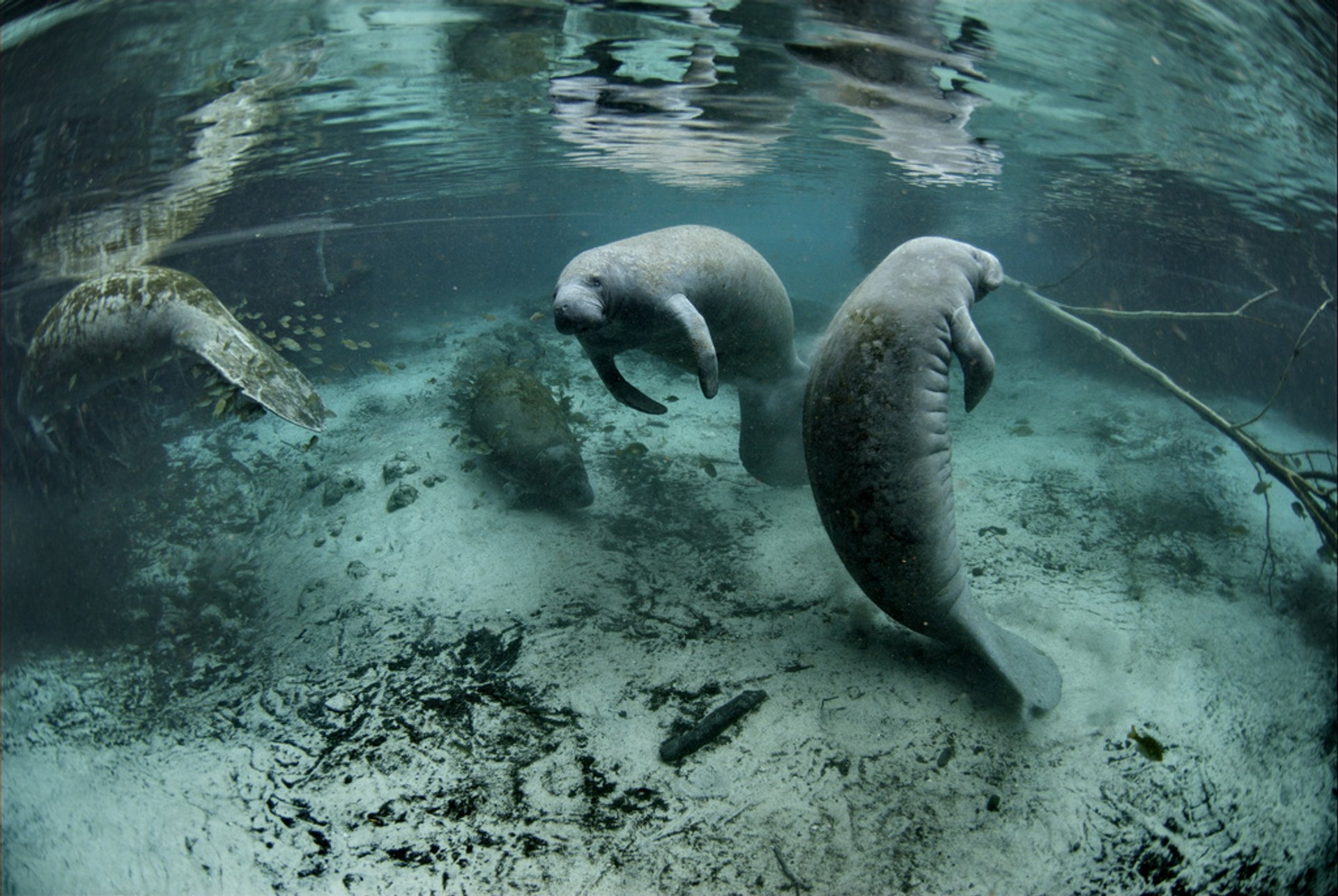 Best time for Swimming with Manatees in Florida 2020