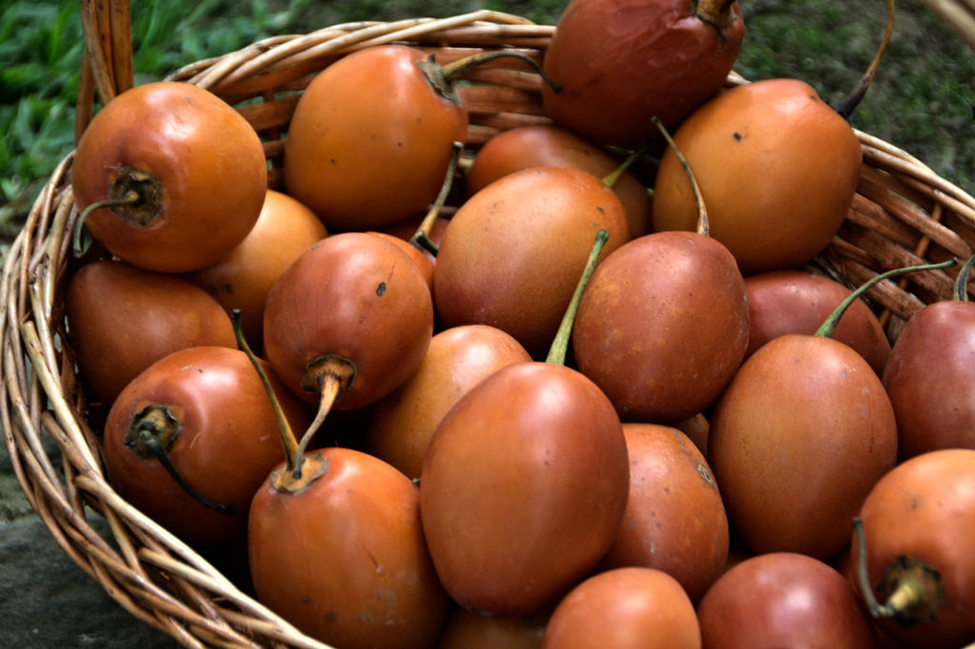 Tamarillo in New Zealand - Best Time