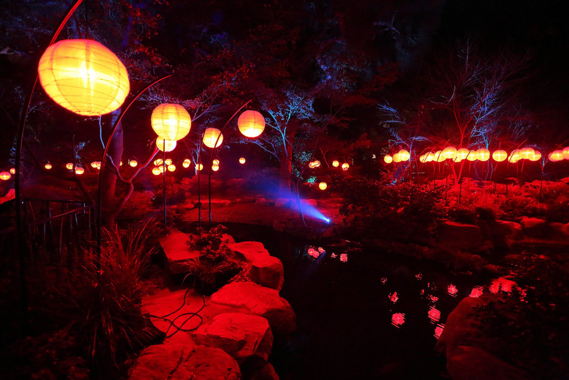 Enchanted: Forest of Light in California - Best Season
