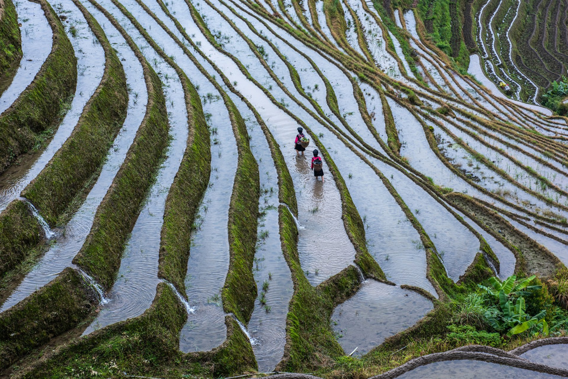 Best time for Longsheng (Longji) Rice Terraces in China 2019