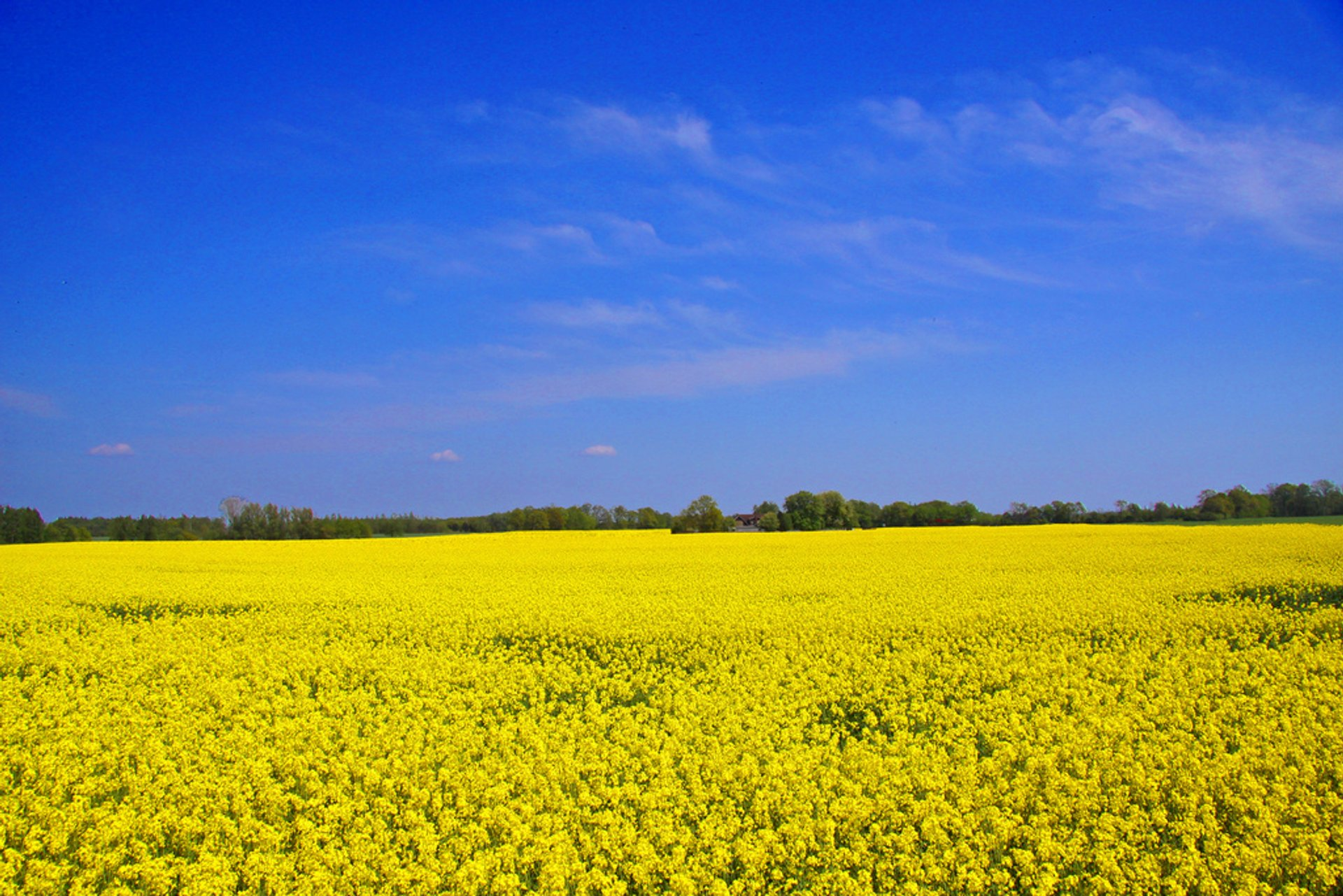 Best time for Skåne Yellow Spring in Sweden 2020