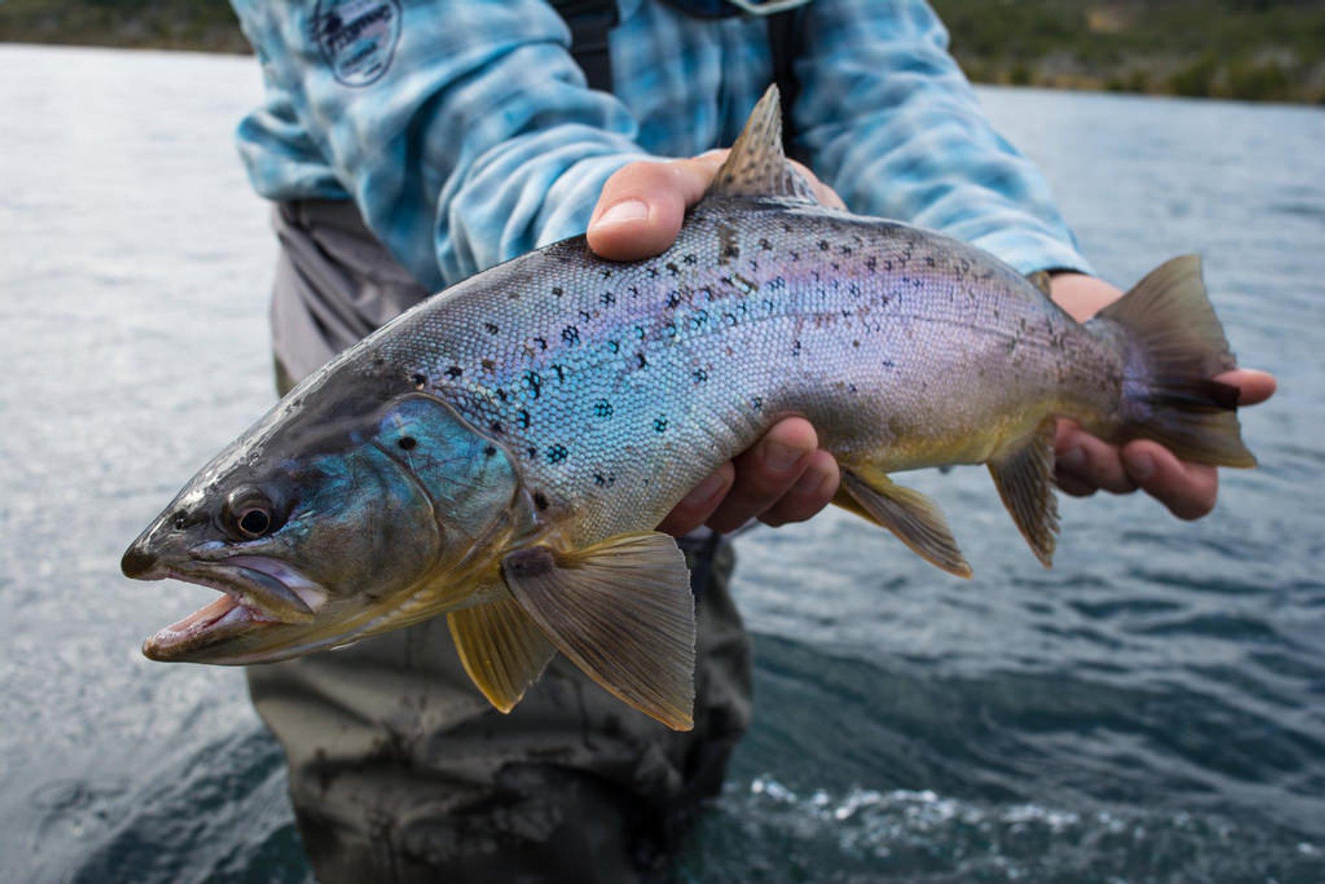 Fishing in Chile - Best Season 2020