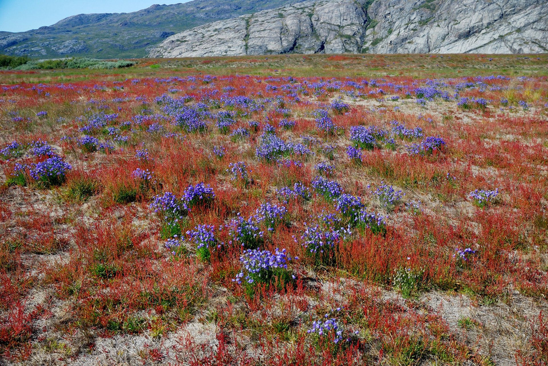 Flower Valley in Narsarsuaq 2020