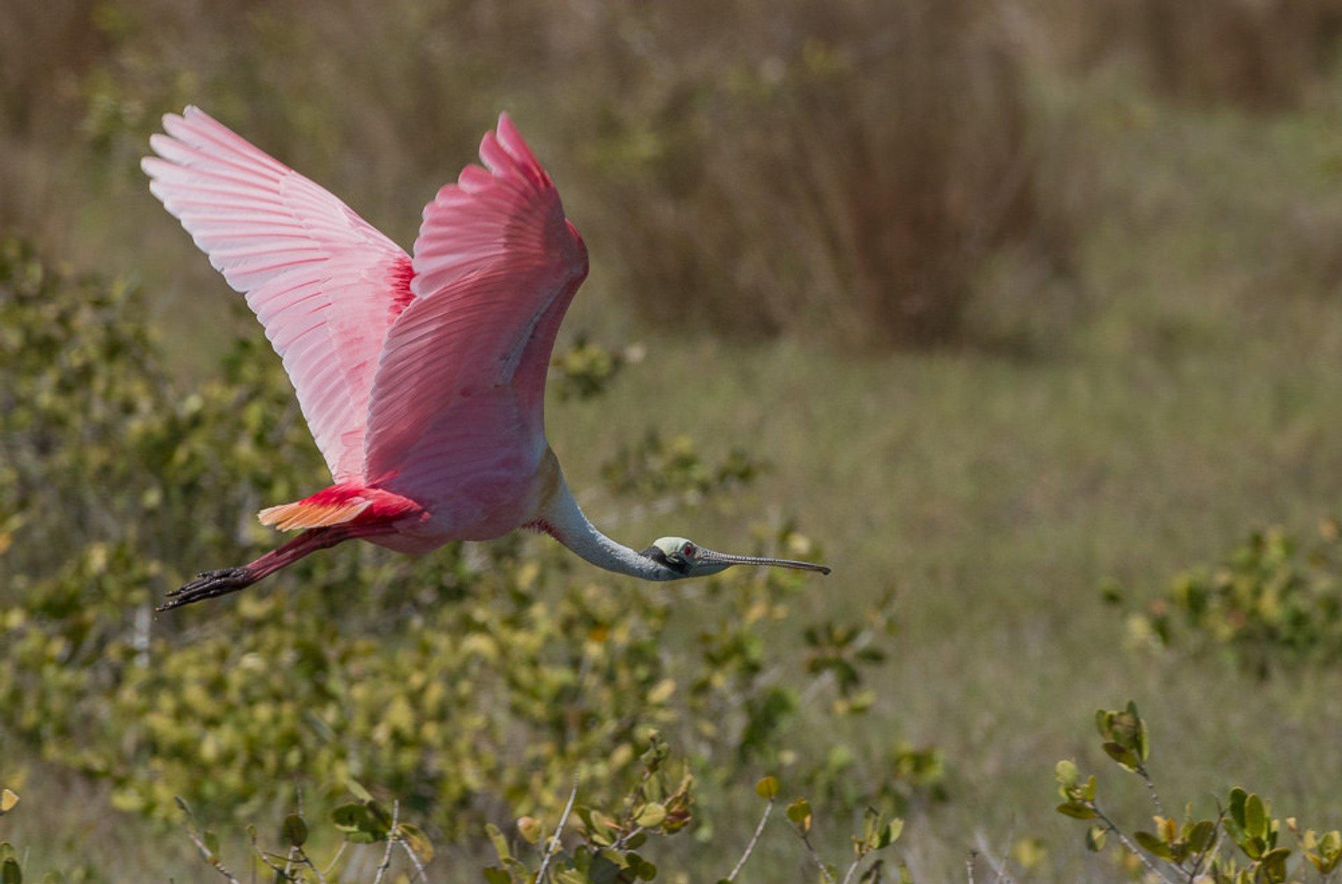 Birdwatching  in Florida 2020 - Best Time