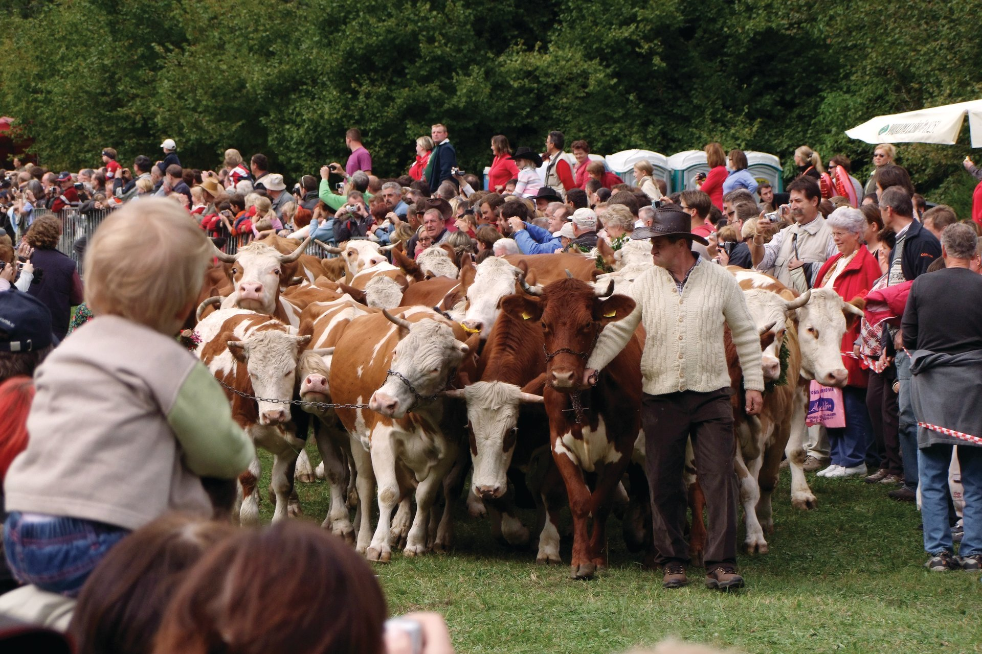 Best time for Cow Ball in Slovenia 2019