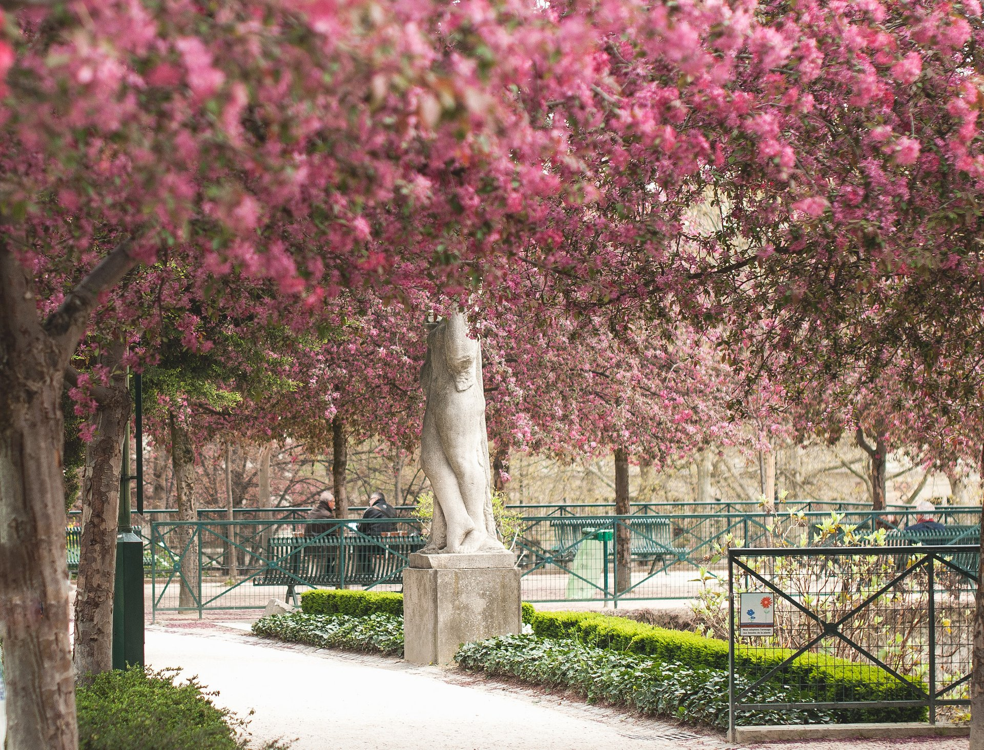 Cherry Blossom in Paris - Best Season 2020