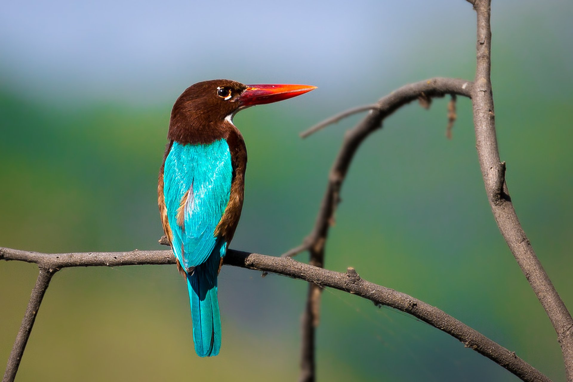 Birdwatching in Taj Mahal and Agra  2020 - Best Time