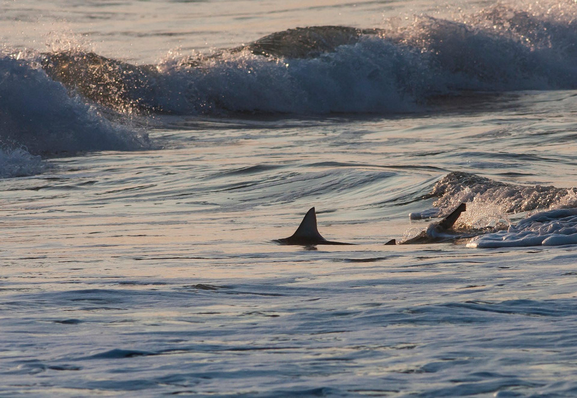 Blacktip and Spinner Sharks in Florida 2019 - Best Time