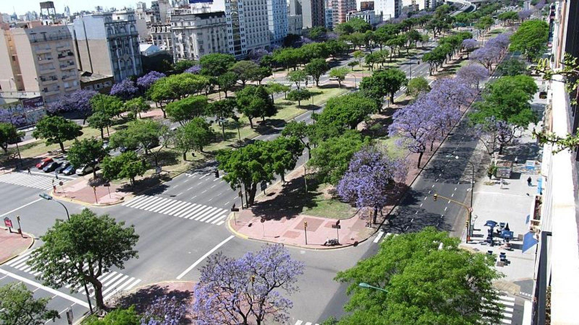 Best time for Jacaranda Bloom 2020