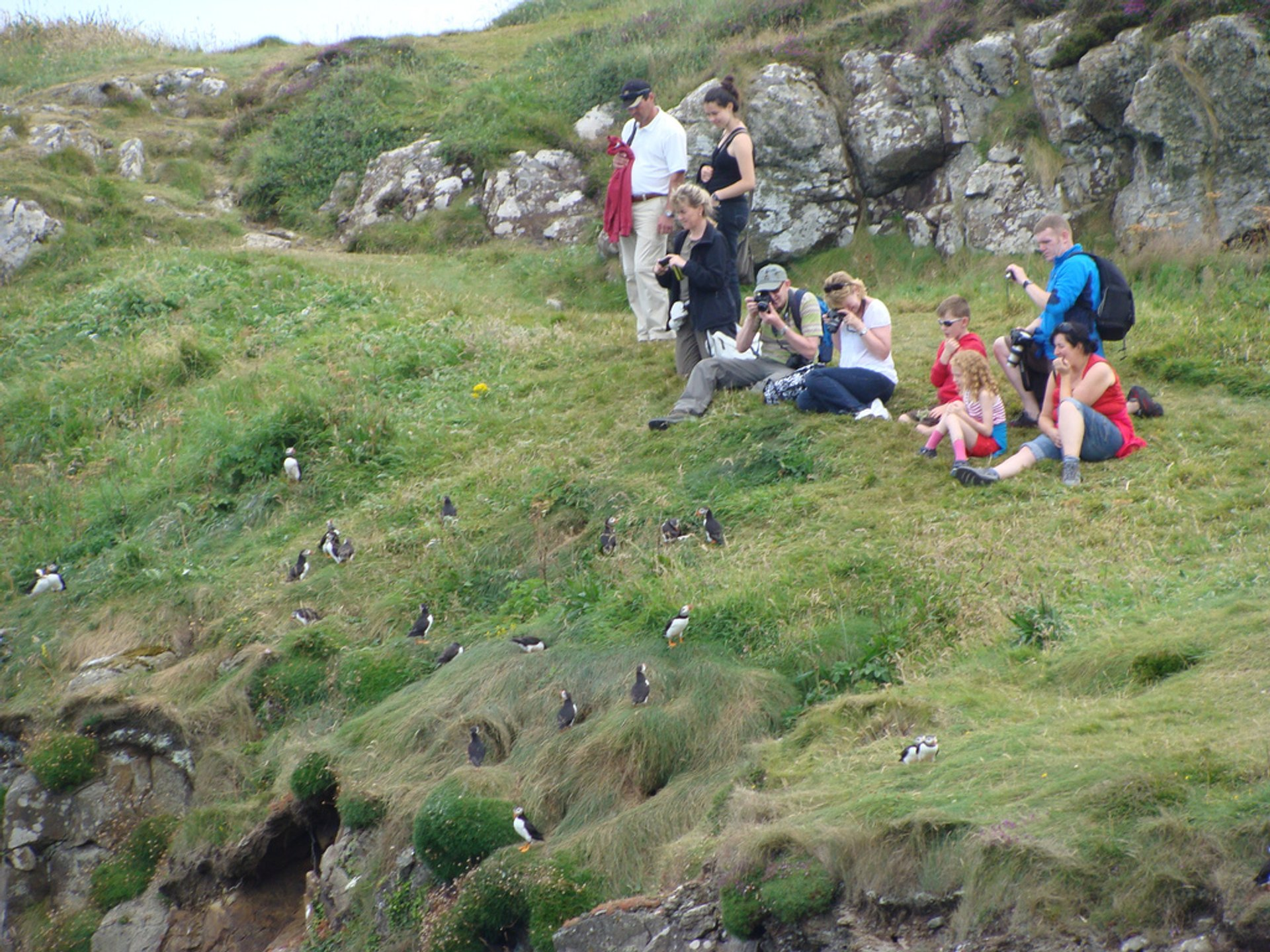 Watching puffins on Staffa Island 2020
