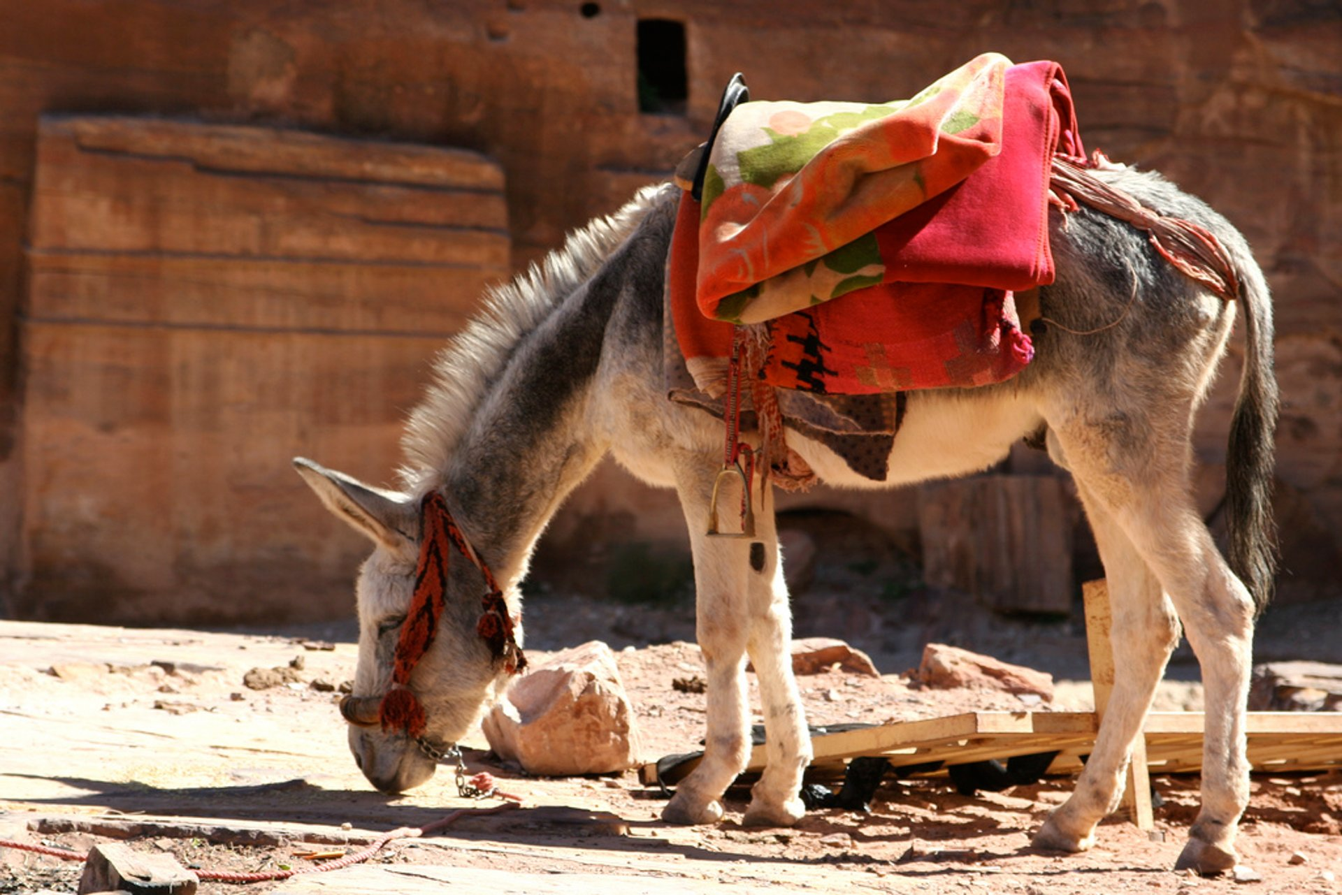 Donkey Ride in Jordan 2020 - Best Time