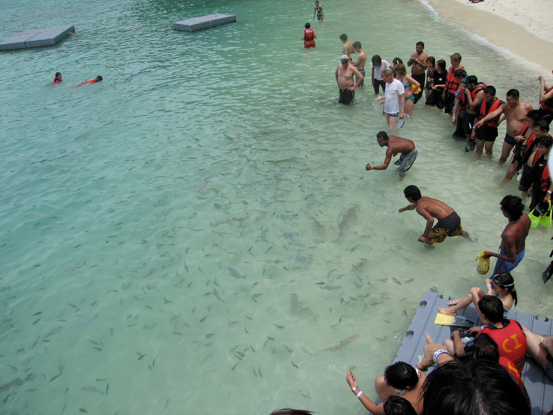 Feeding Baby Sharks in Malaysia 2020 - Best Time