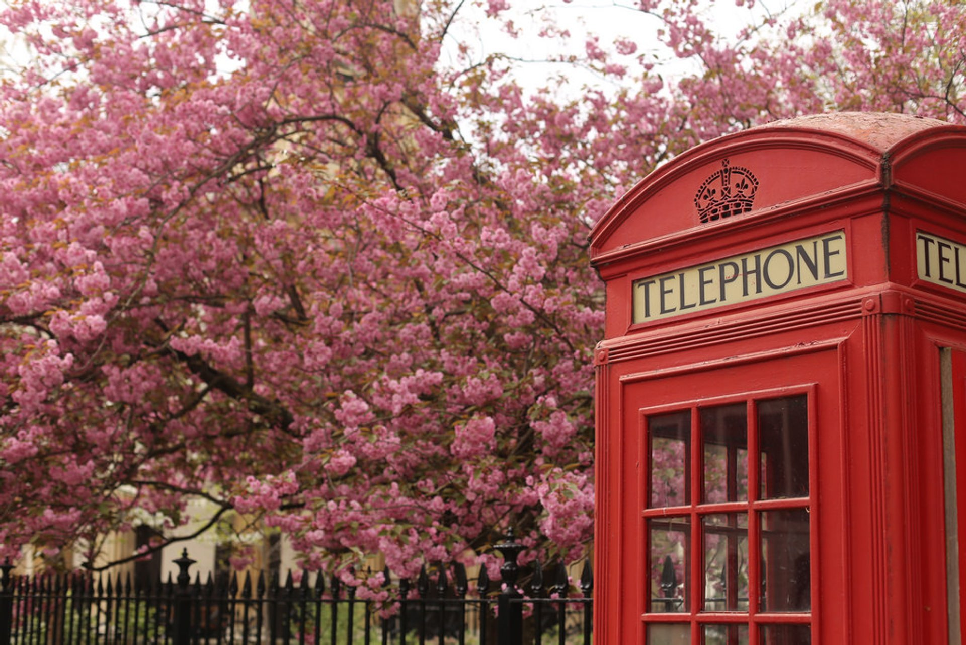 Spring Blossoms in London 2020 - Best Time