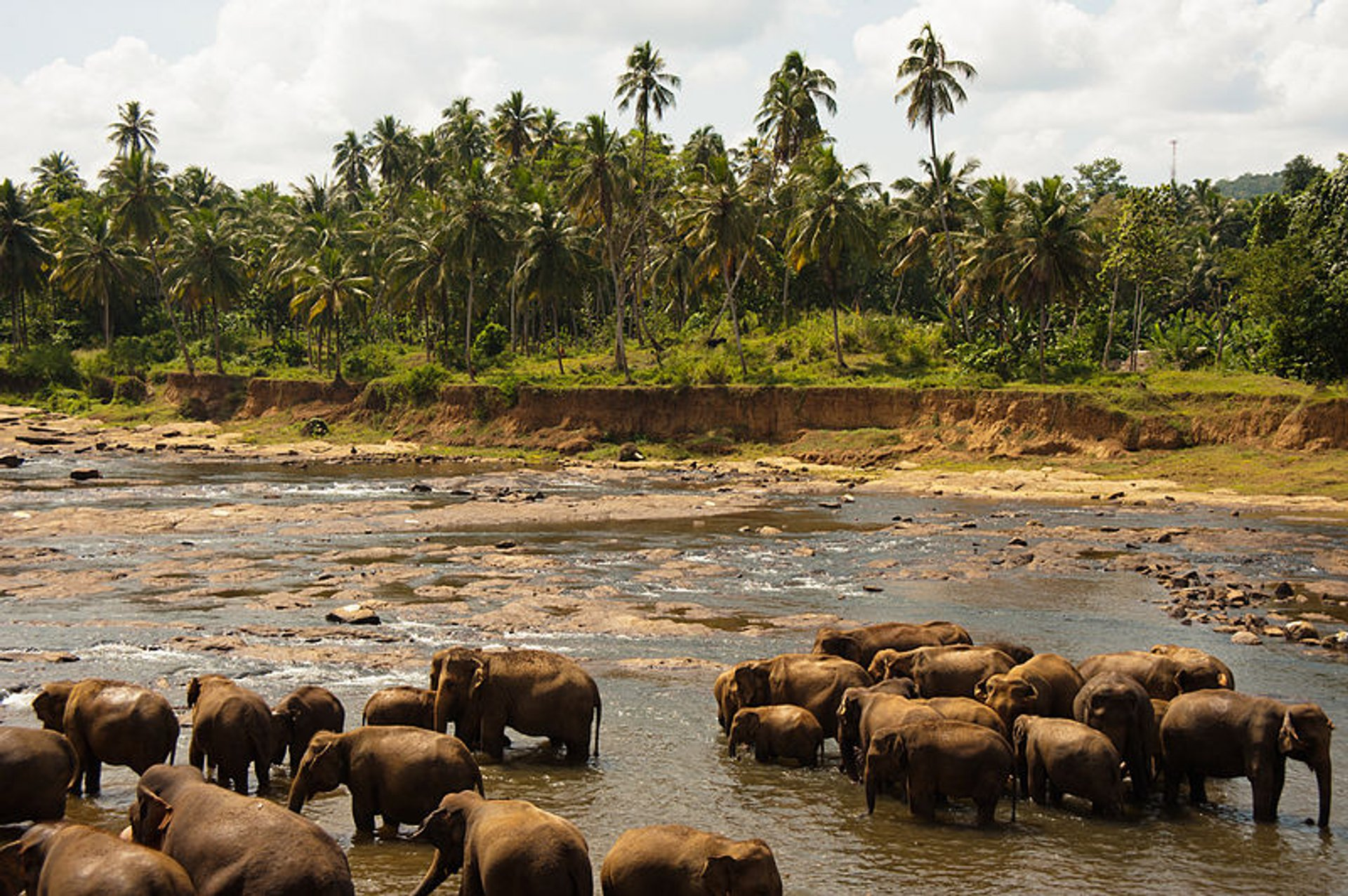 Elephant Safari in Udawalawe National Park in Sri Lanka - Best Season 2020