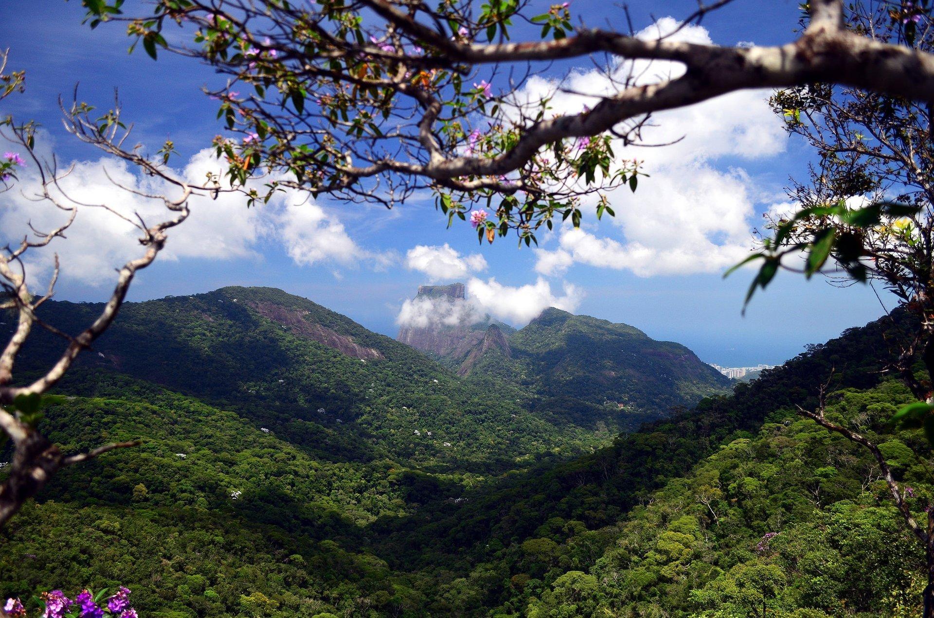 Tijuca Forest in Rio de Janeiro 2020 - Best Time