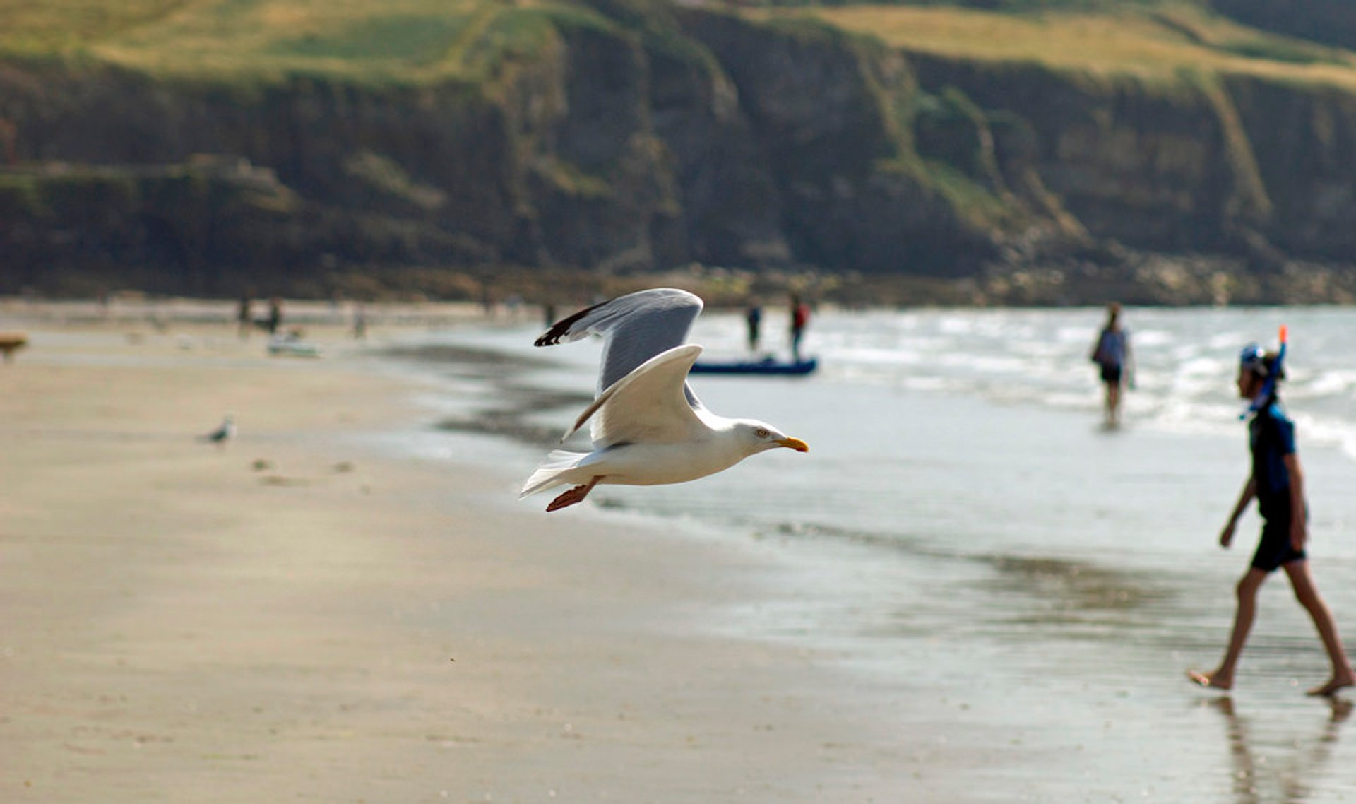 Seagull in Pembrokeshire, Wales 2020