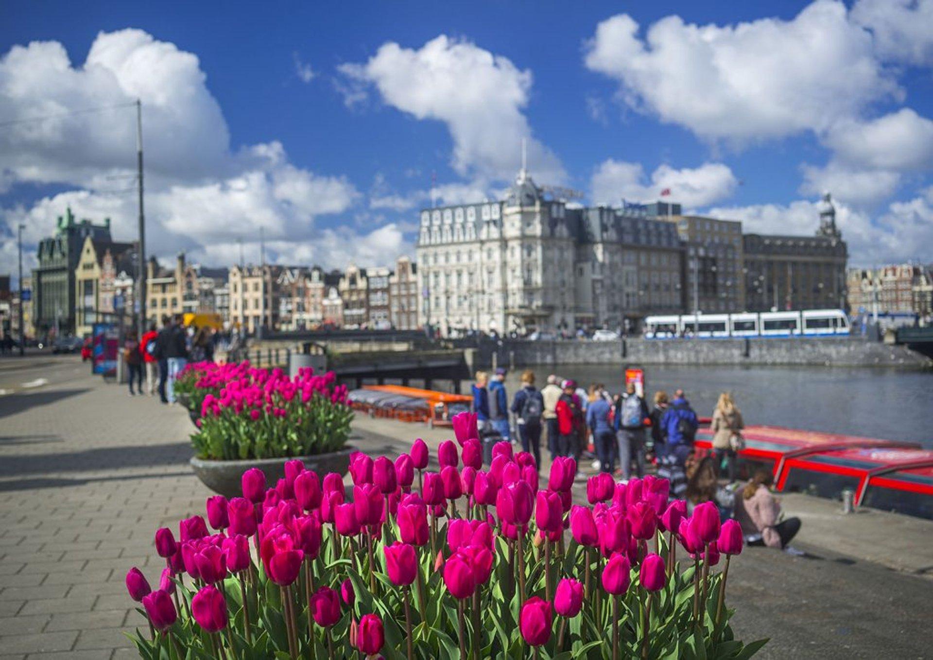 Tulp Festival (Amsterdam Tulip Festival) in Amsterdam - Best Season 2020