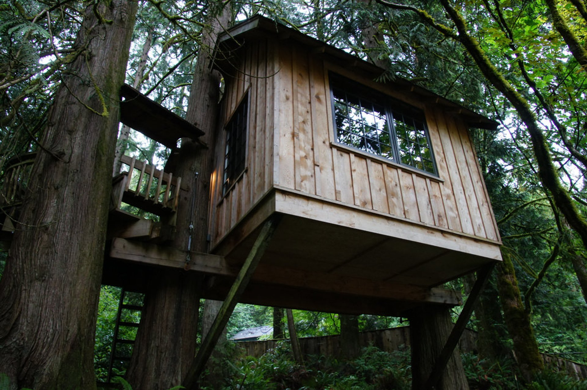 TreeHouse Point in Seattle - Best Season 2020