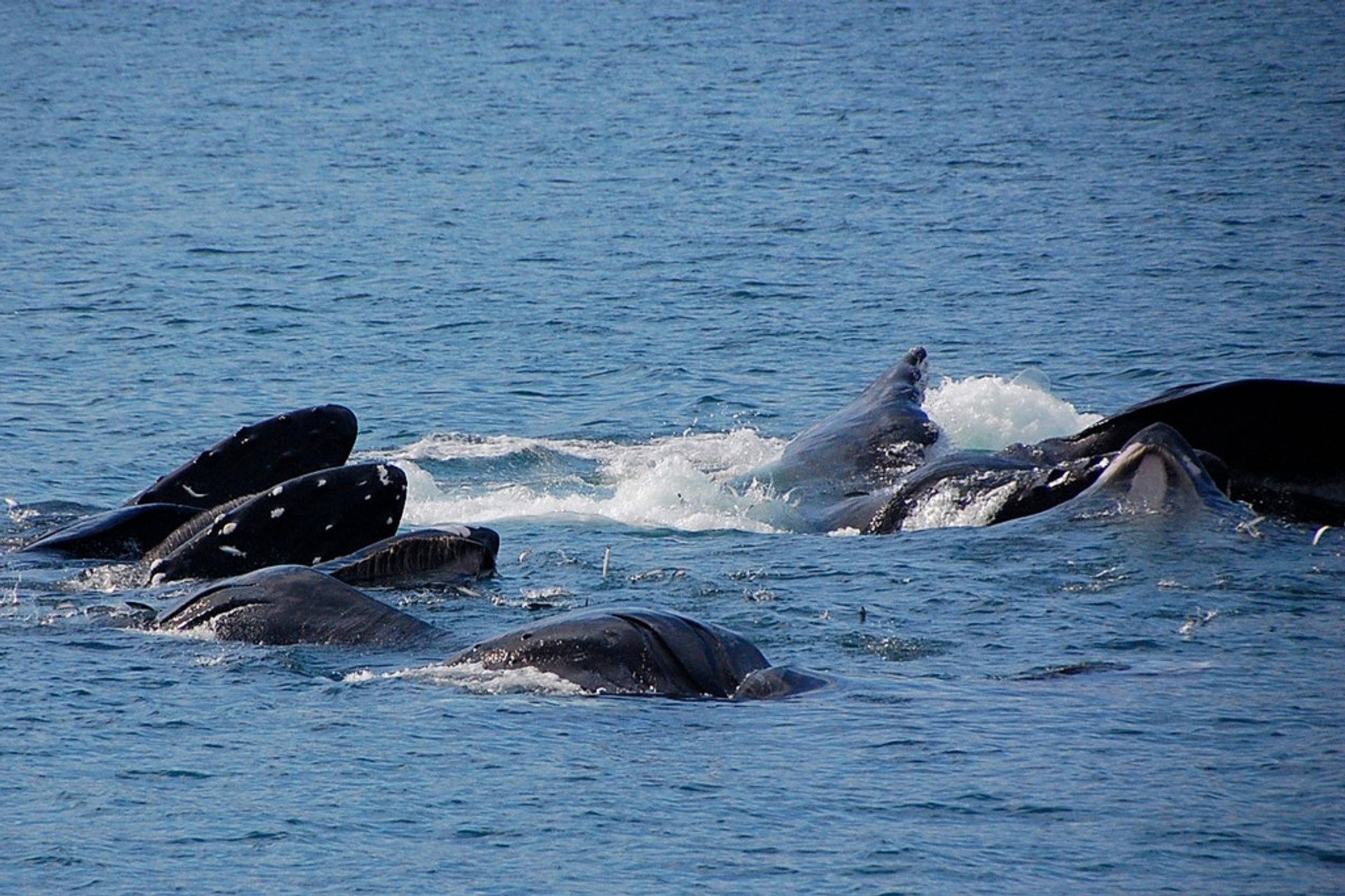 Humpback Whales in Fiji - Best Season