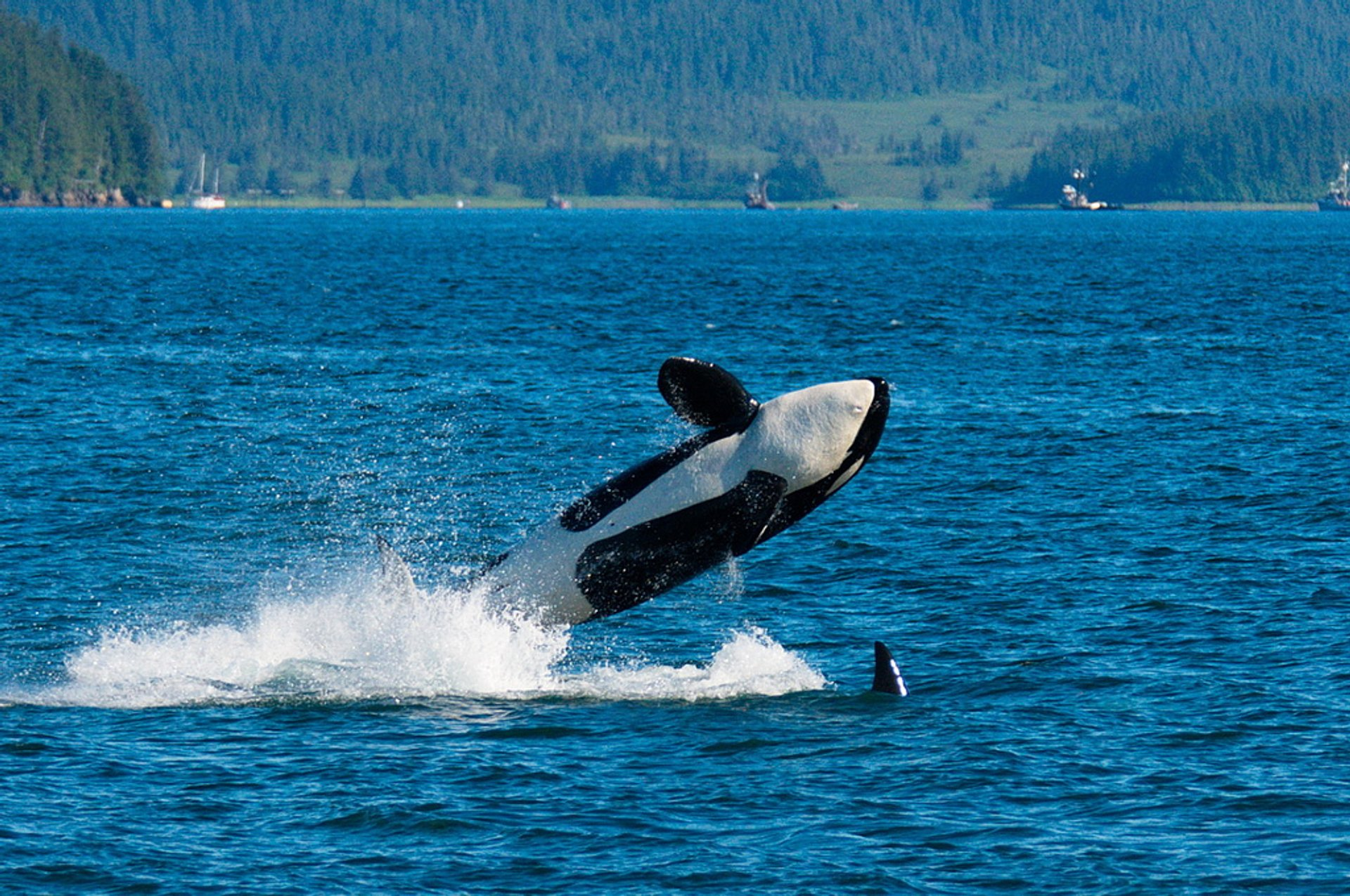 Whale Watching in Alaska 2019 - Best Time