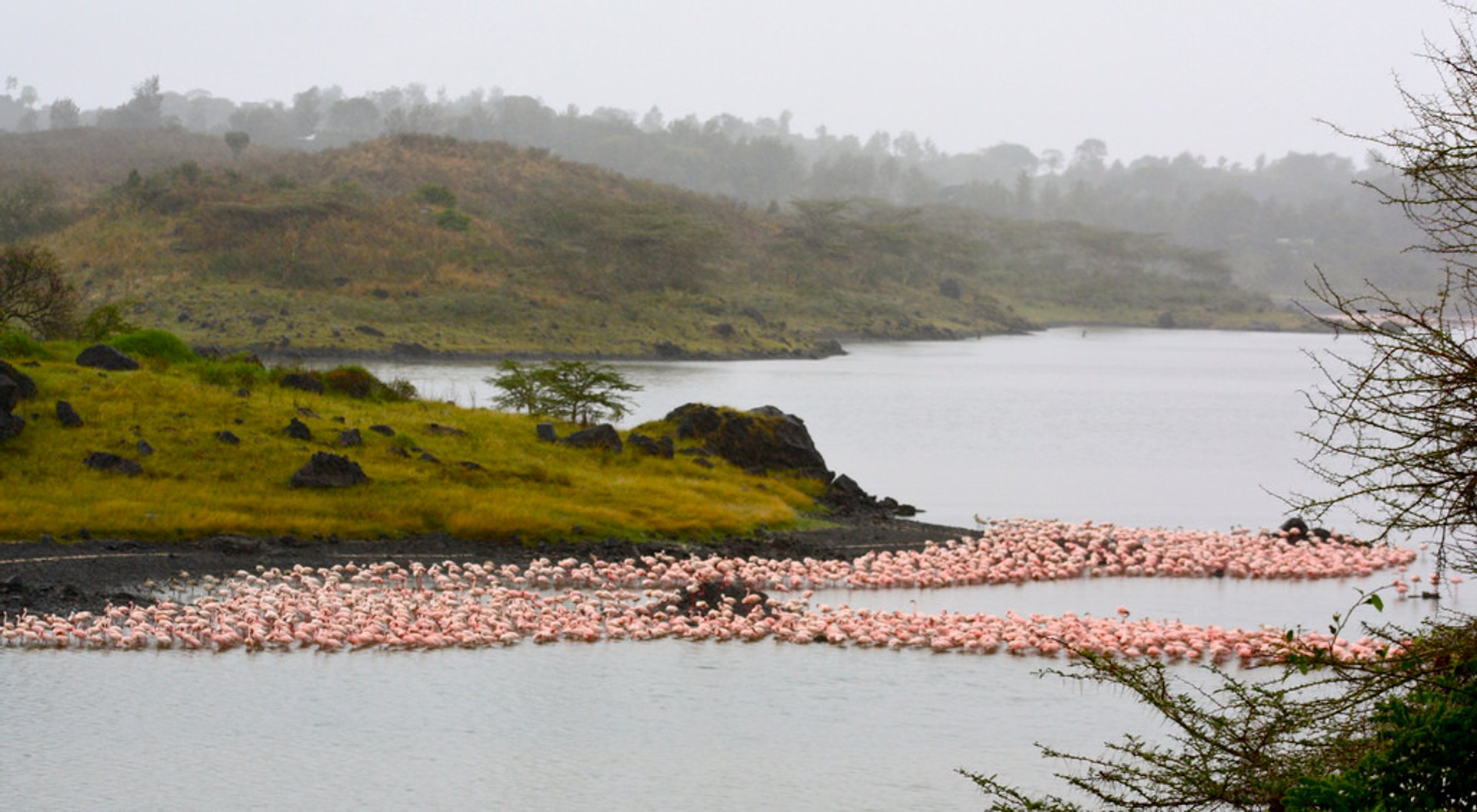 Arusha National Park 2020