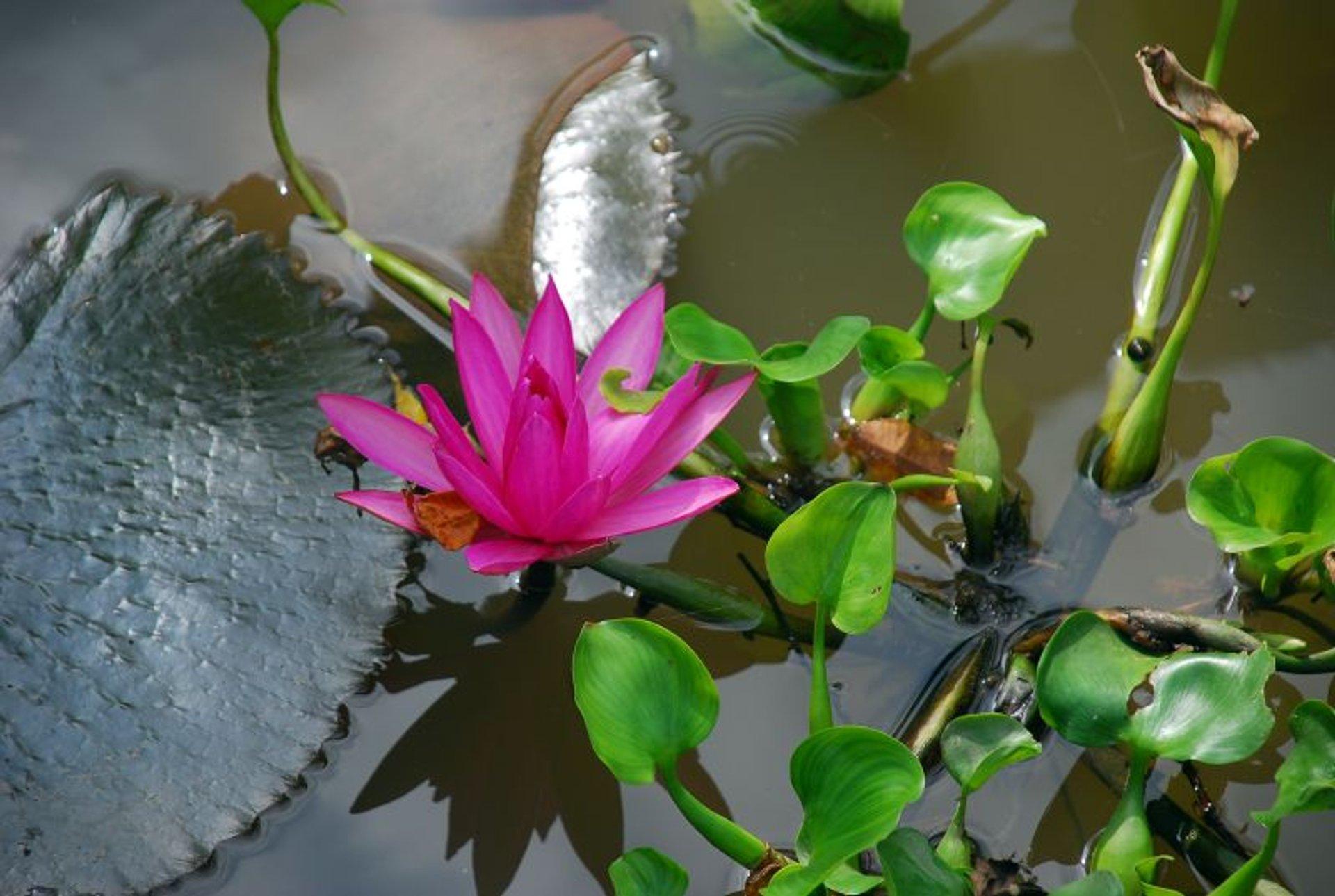 Mekong Delta Flower Season in Vietnam - Best Time