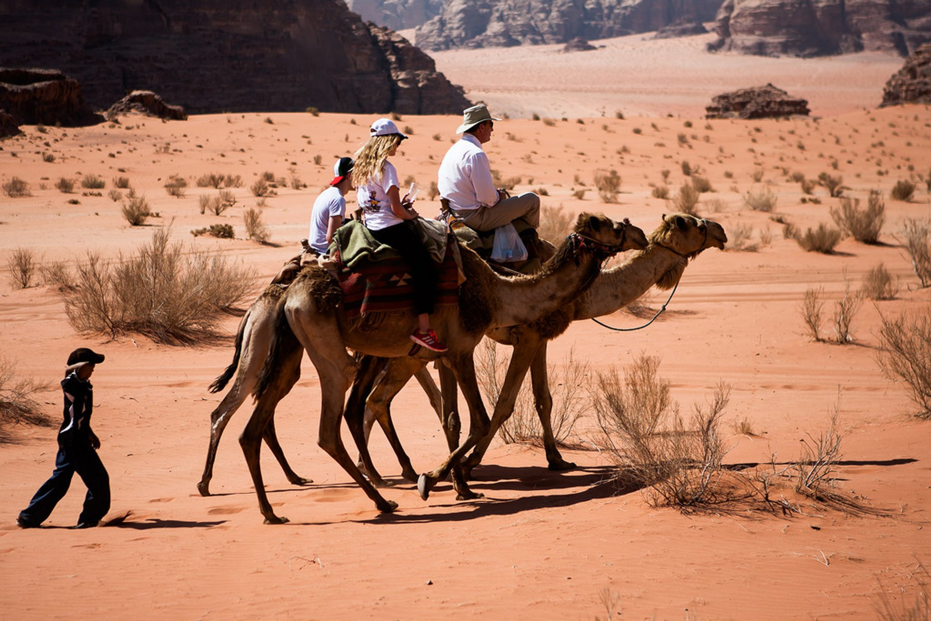 Camel Safari in Jordan - Best Season 2020