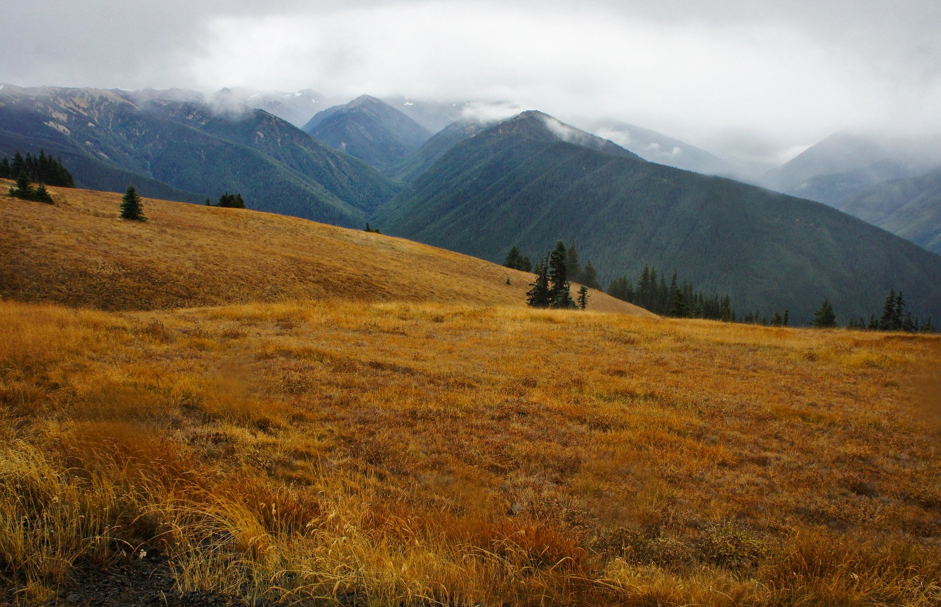 Hurricane Ridge, Olympic National Park 2020