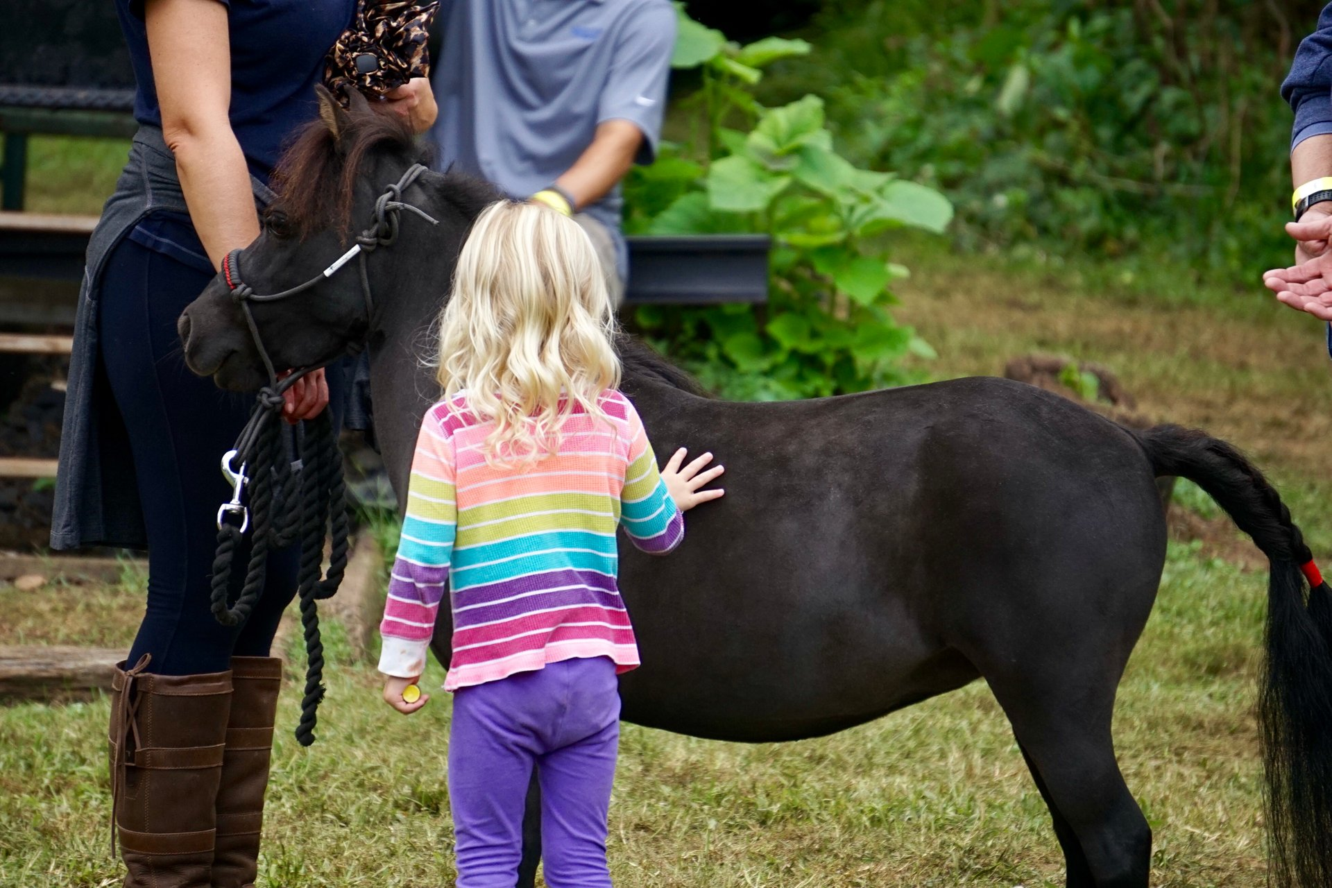 A little girl pets a black miniature pony at the Bluemont Fair 2020