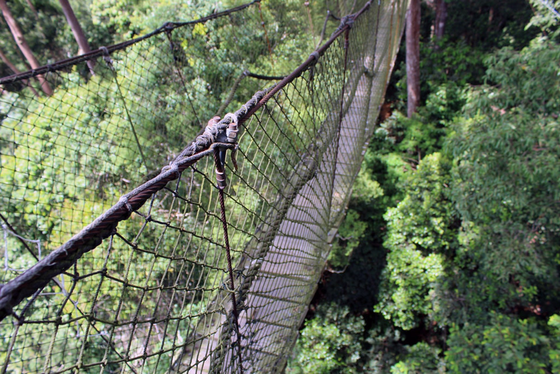 Canopy Walks in Borneo 2020 - Best Time