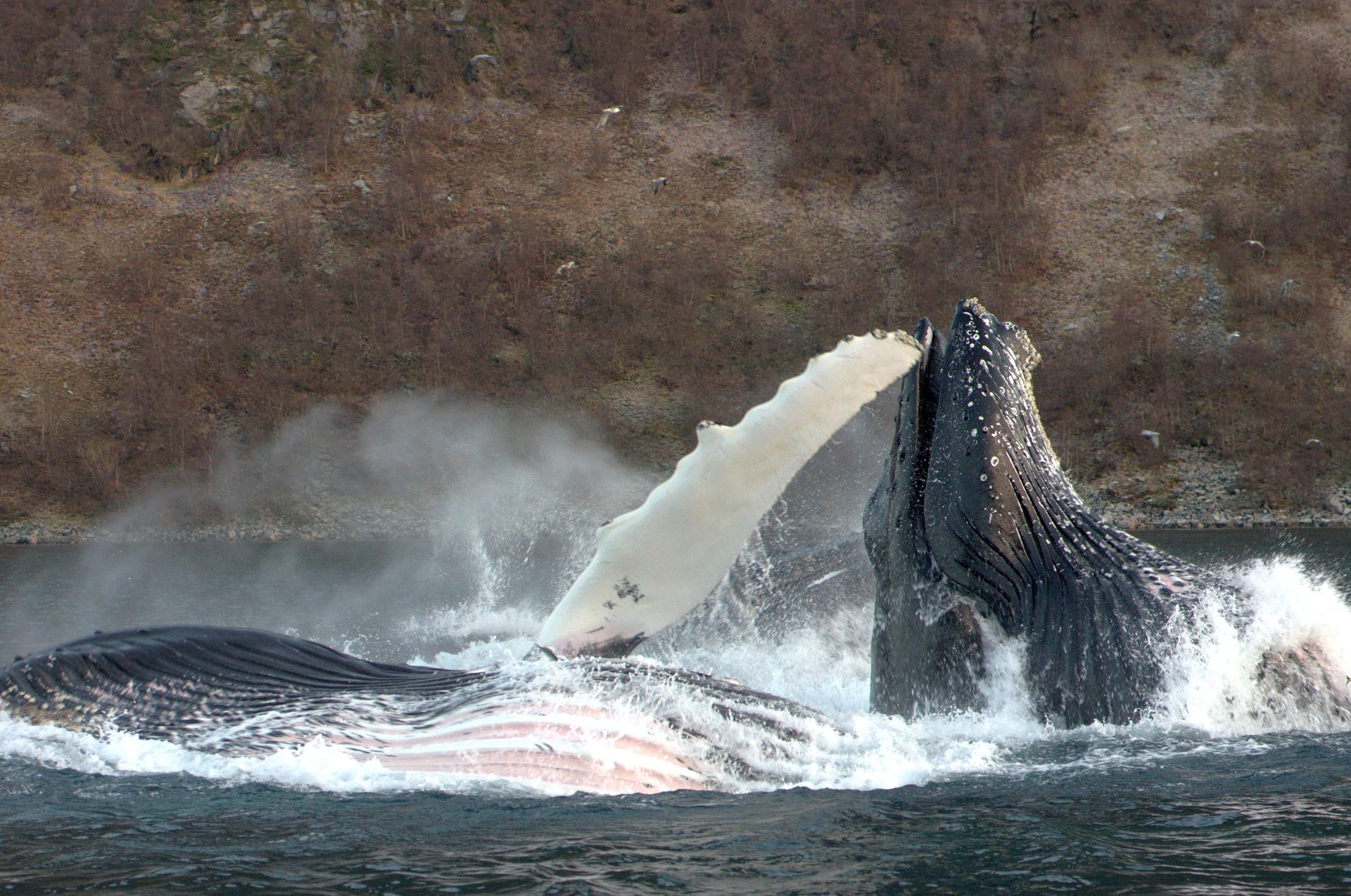 Best time for Whale Safari in Norway