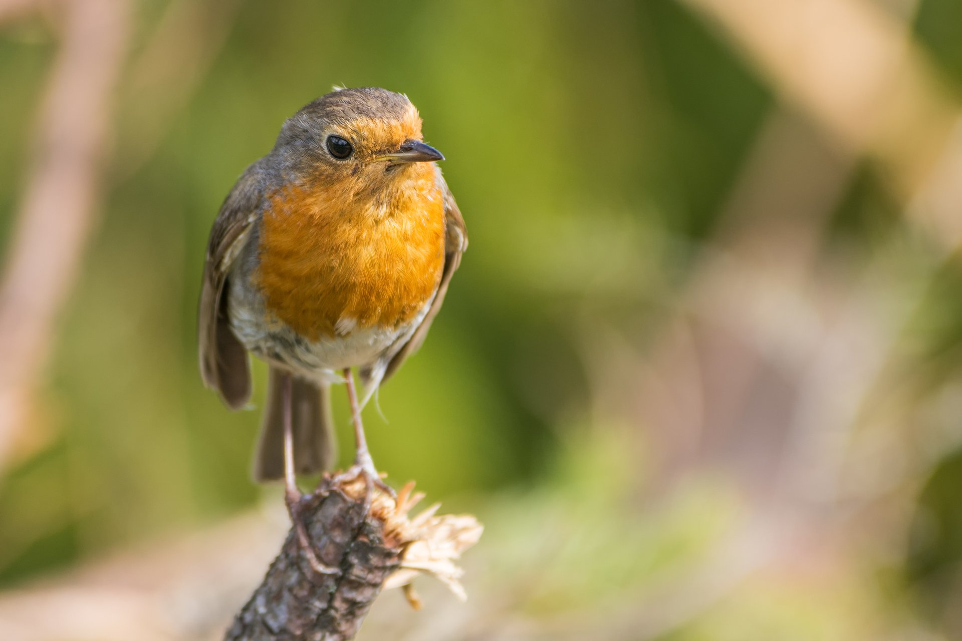 Birdwatching in Slovakia 2020 - Best Time