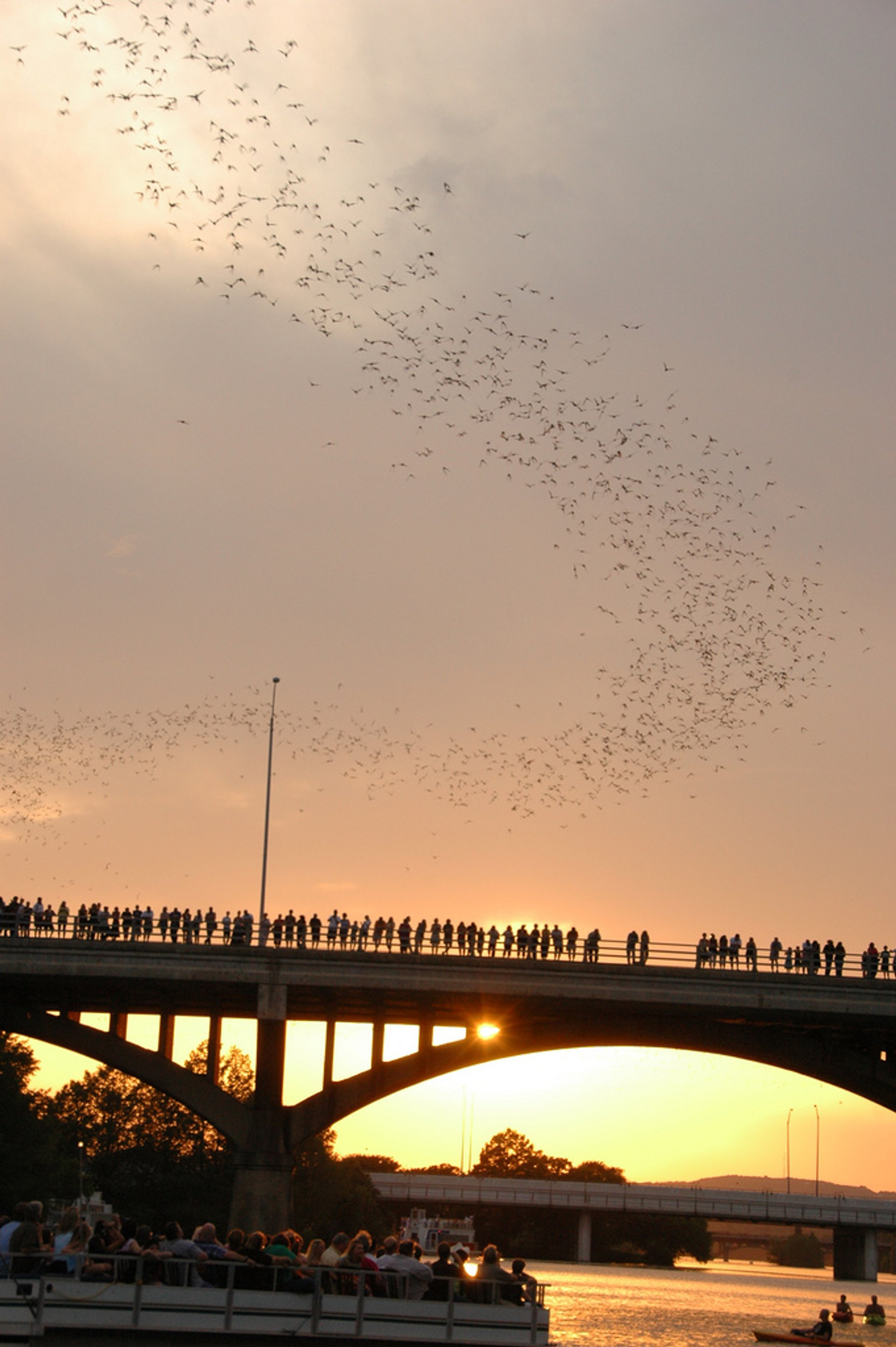 Bats leaving the Congress St. Bridge, Austin 2019