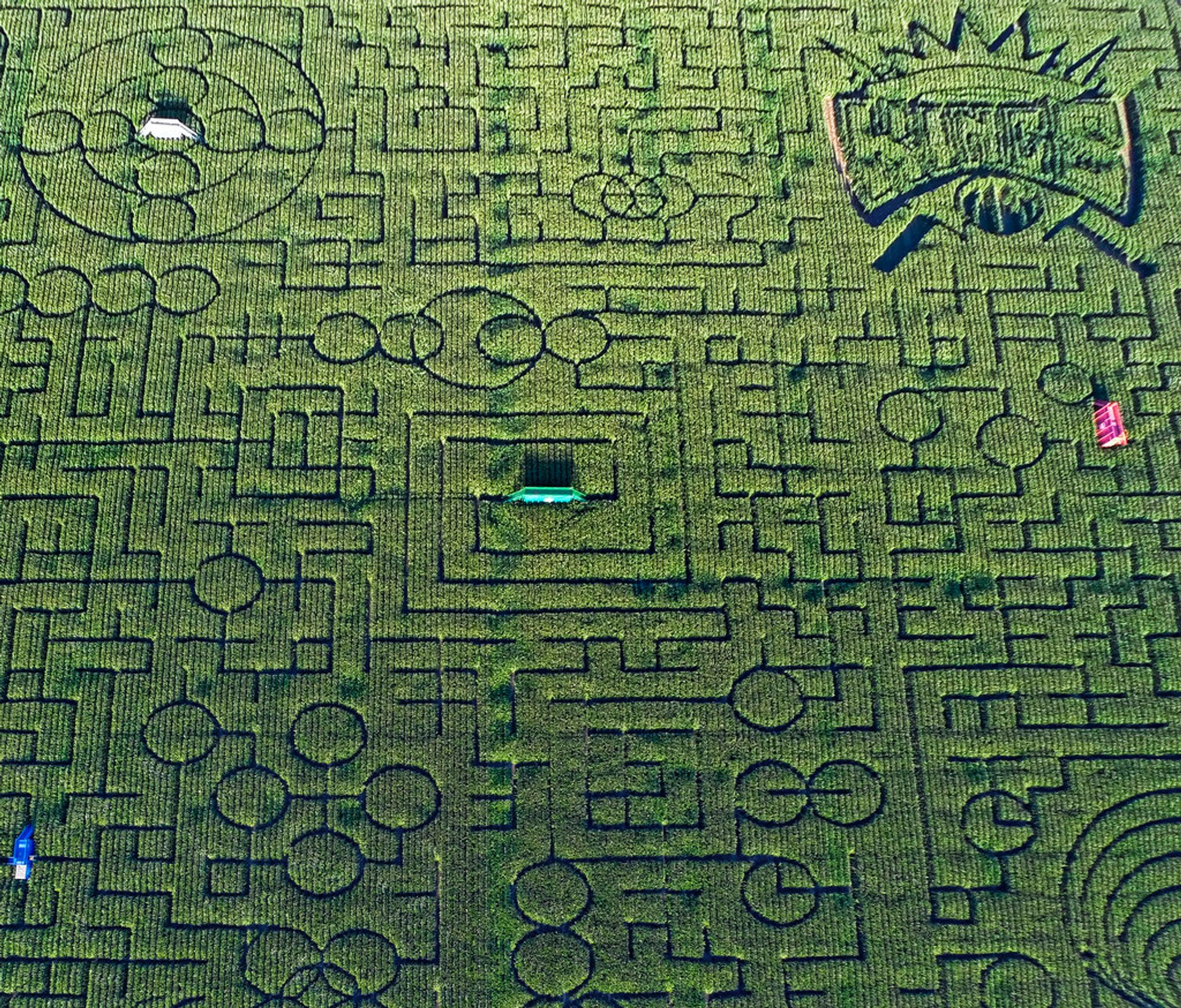 Cool Patch Pumpkins Corn Maze in California 2020 - Best Time
