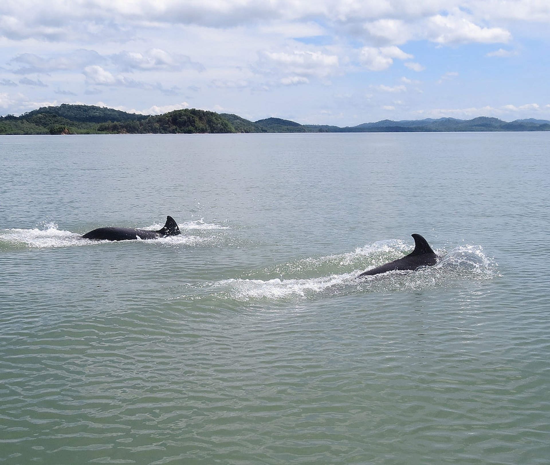 Dolphins Watching in Panama - Best Season 2020
