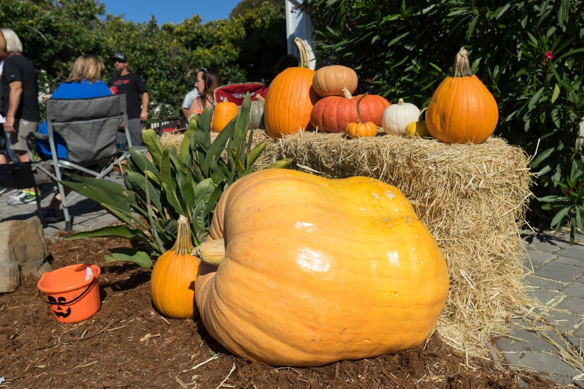 Best time to see Half Moon Bay Pumpkin Festival 2020