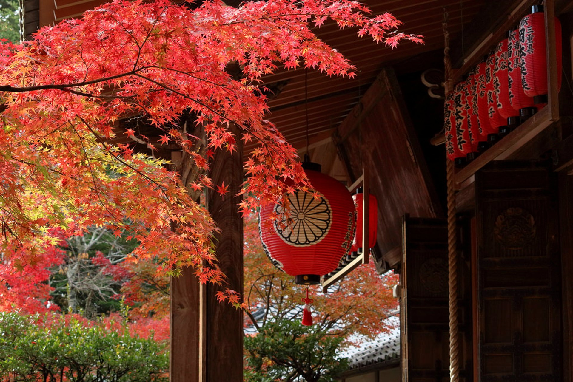 Best time for Autumn Foliage (Kōyō) 2020