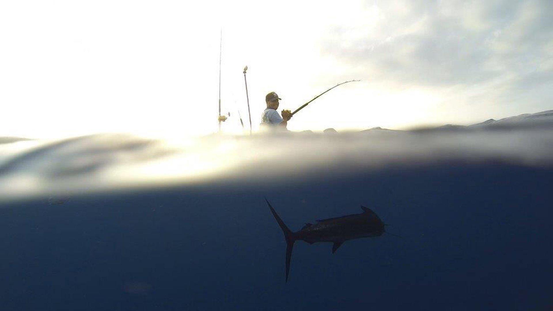 Yellowfin Tuna Fishing in Hawaii - Best Time