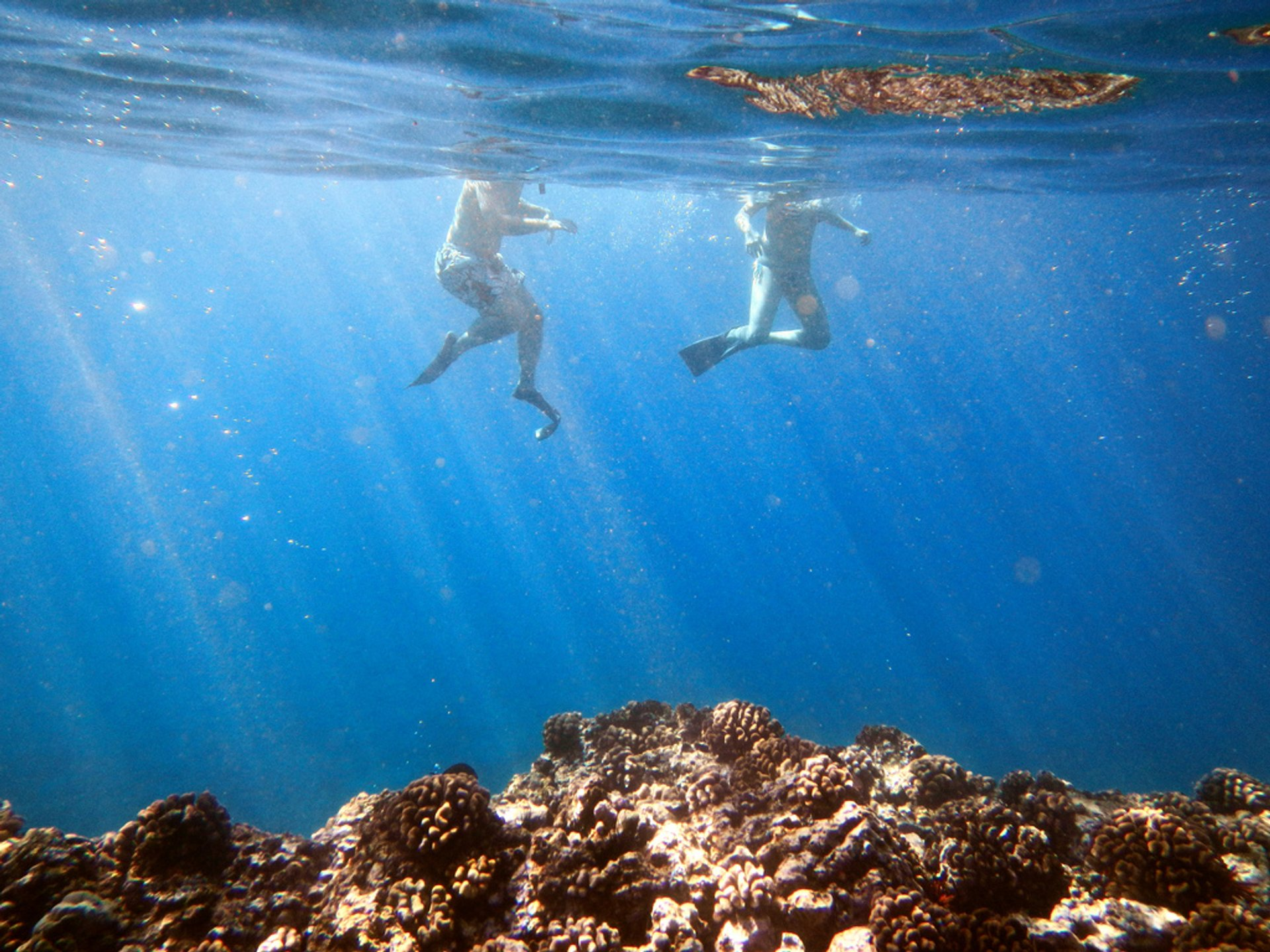 Best time for Snorkeling in Hawaii 2020