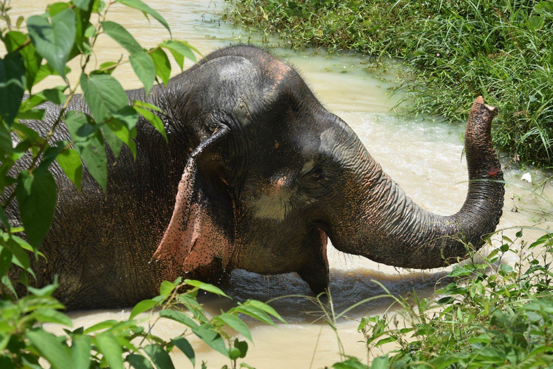 Phuket Elephant Sanctuary 2020