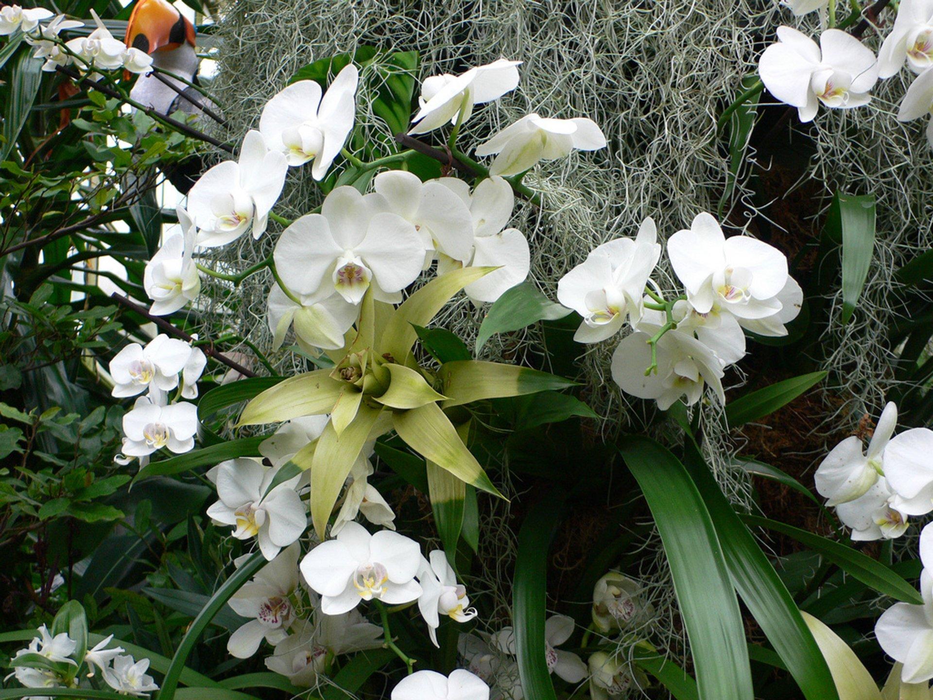 Orchids Festival at Kew Gardens in London - Best Season 2020