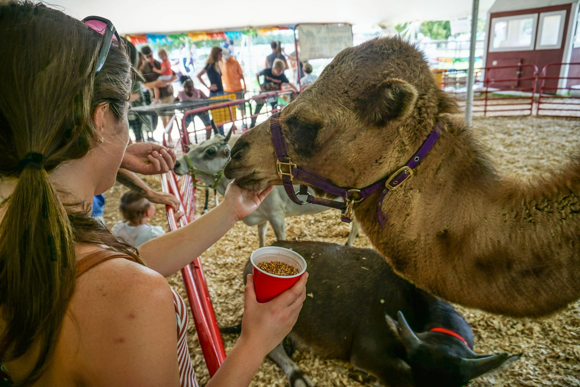 Georgia State Fair in Georgia - Best Season 2020