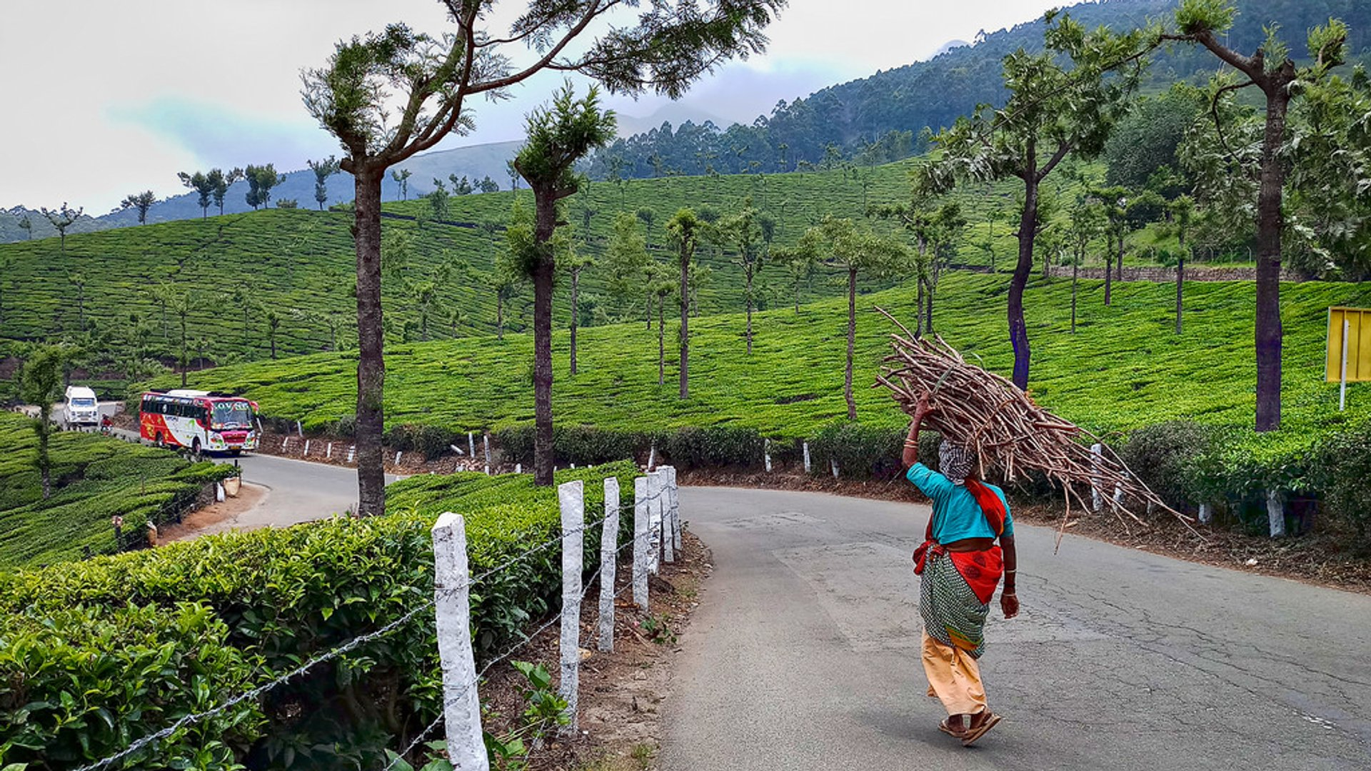 Best time for Munnar Road in Kerala 2019
