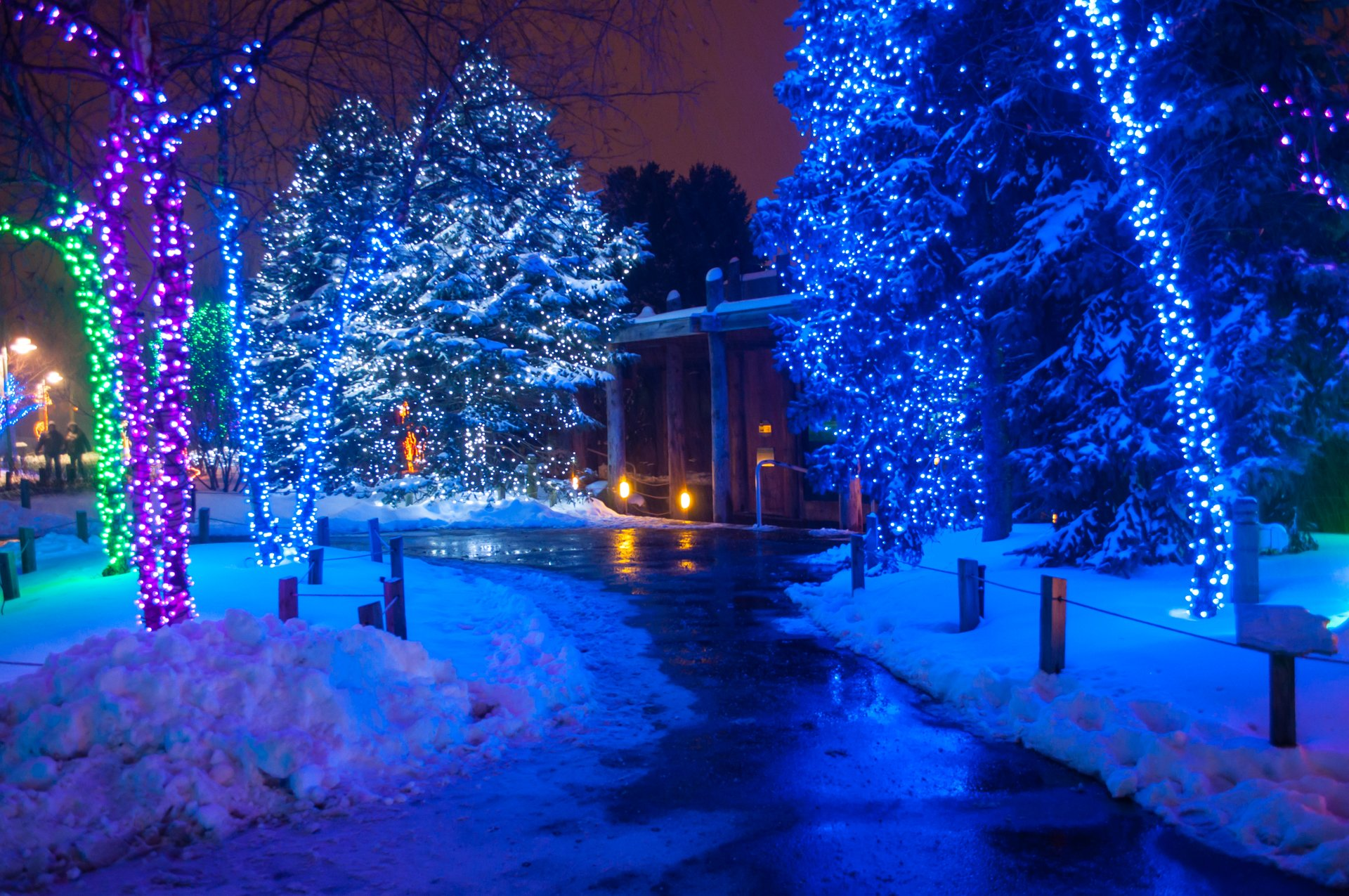 Lights Before Christmas, Toledo Zoo 2020