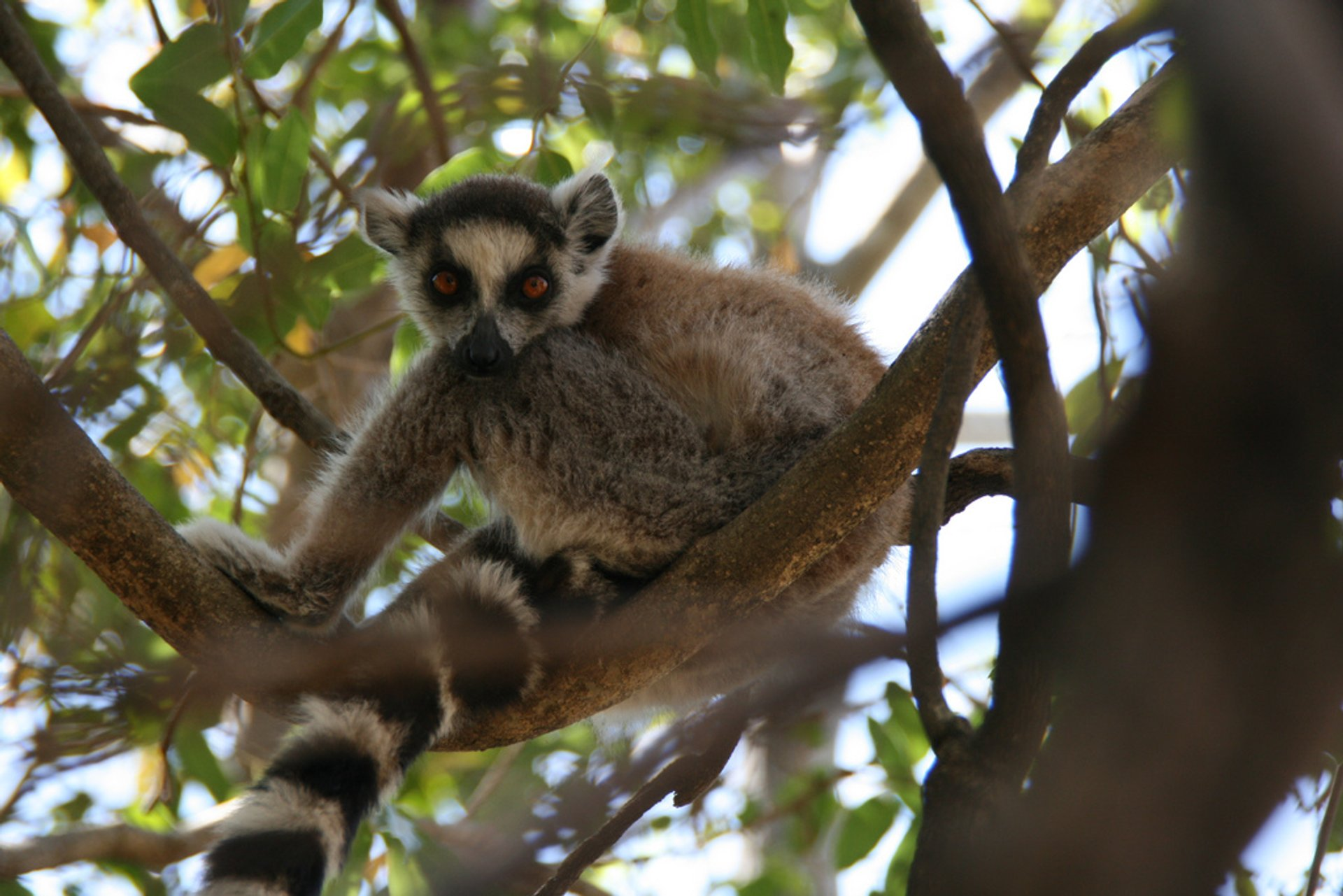 Best time for Jurassic​ Park with Lemurs in Madagascar 2020
