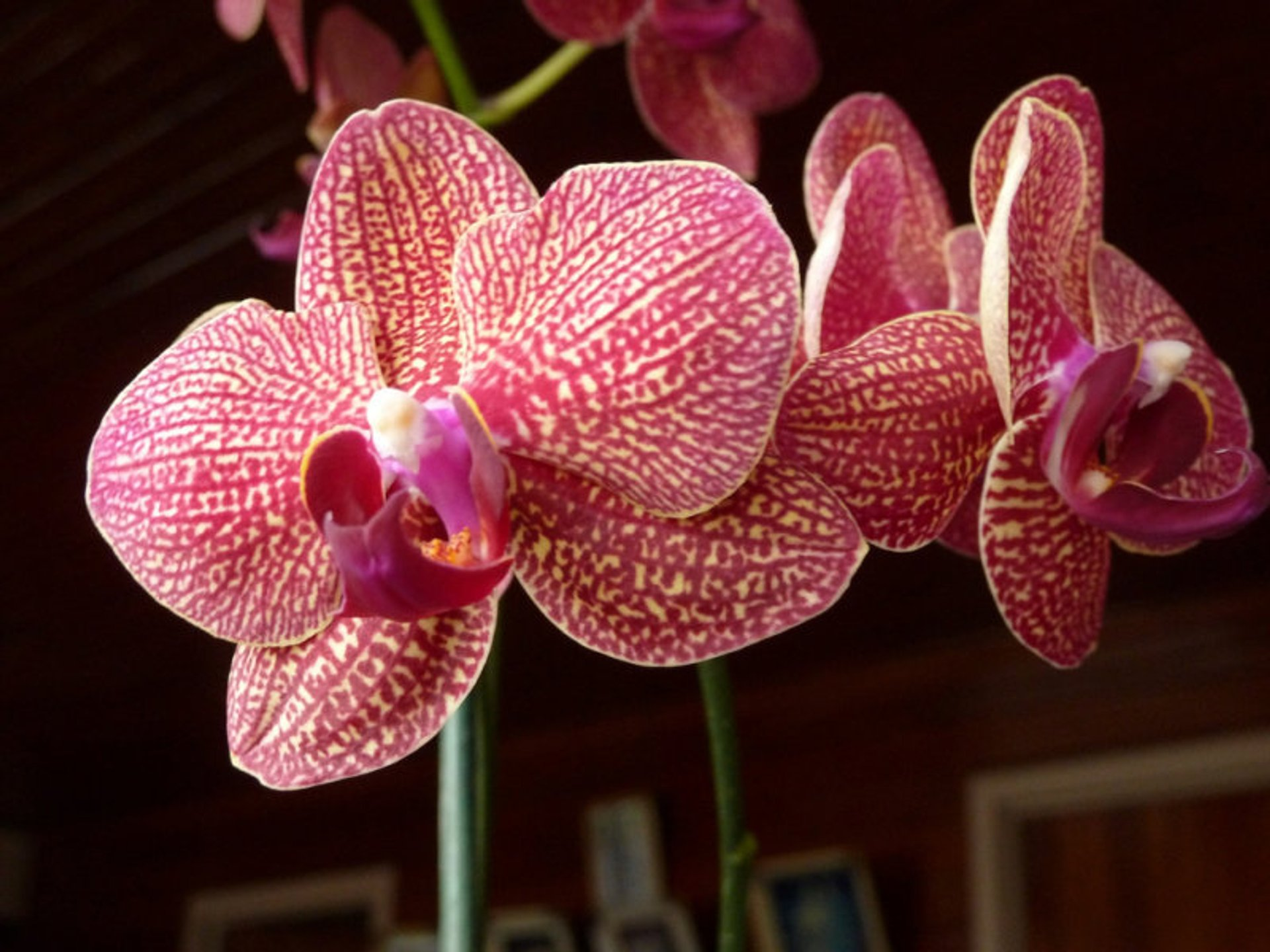 Best time for Orchids 2020
