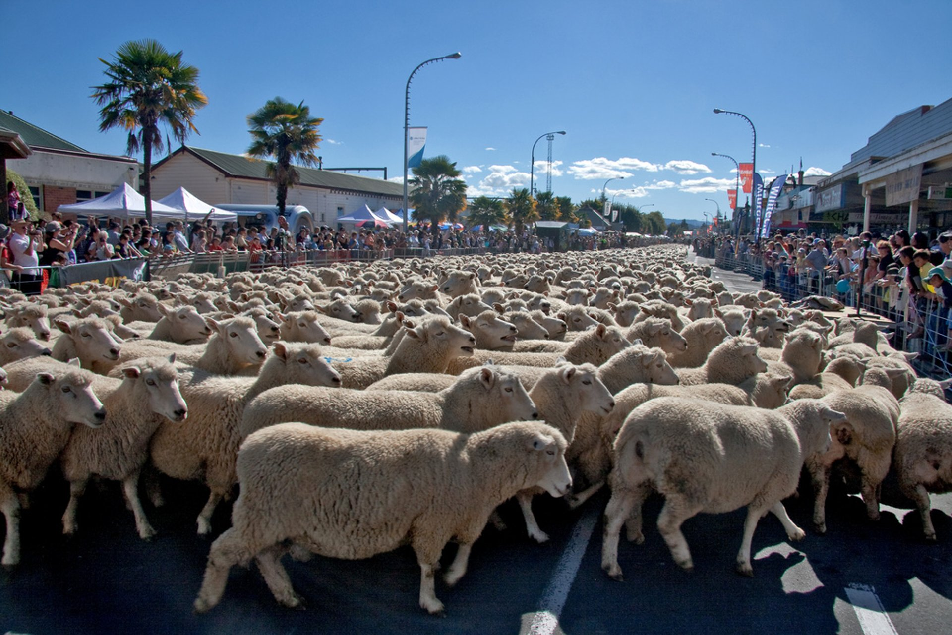 Best time for Great New Zealand Muster in New Zealand 2020