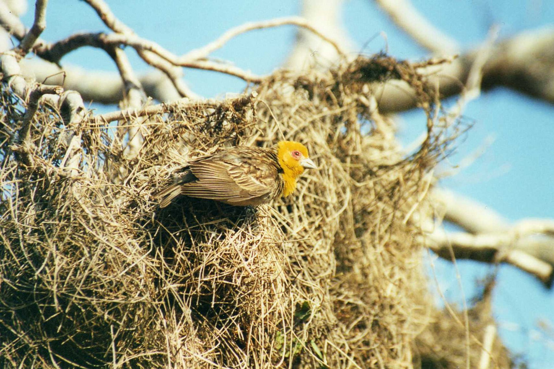 Sakalava Weavers in Madagascar - Best Season 2020